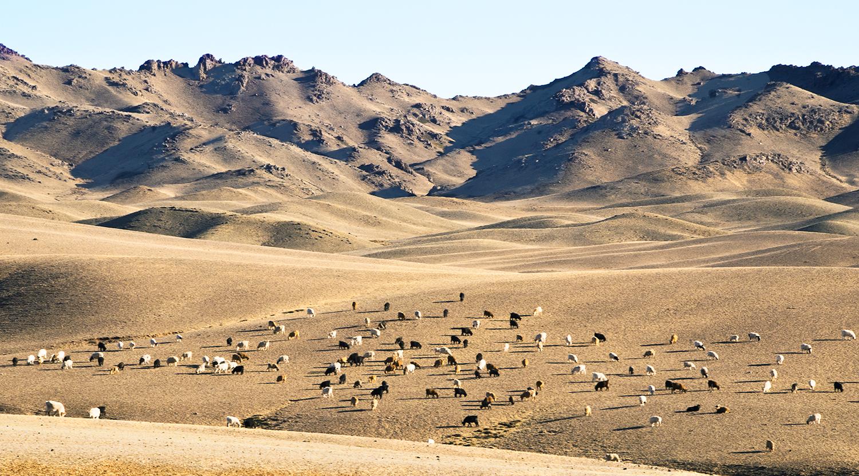 Gobi Desert, Mongolia