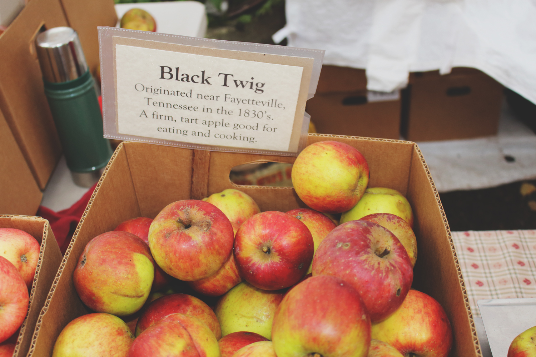 Old World Apples