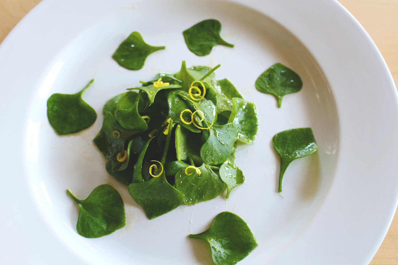 Foraged Miner's Lettuce Salad
