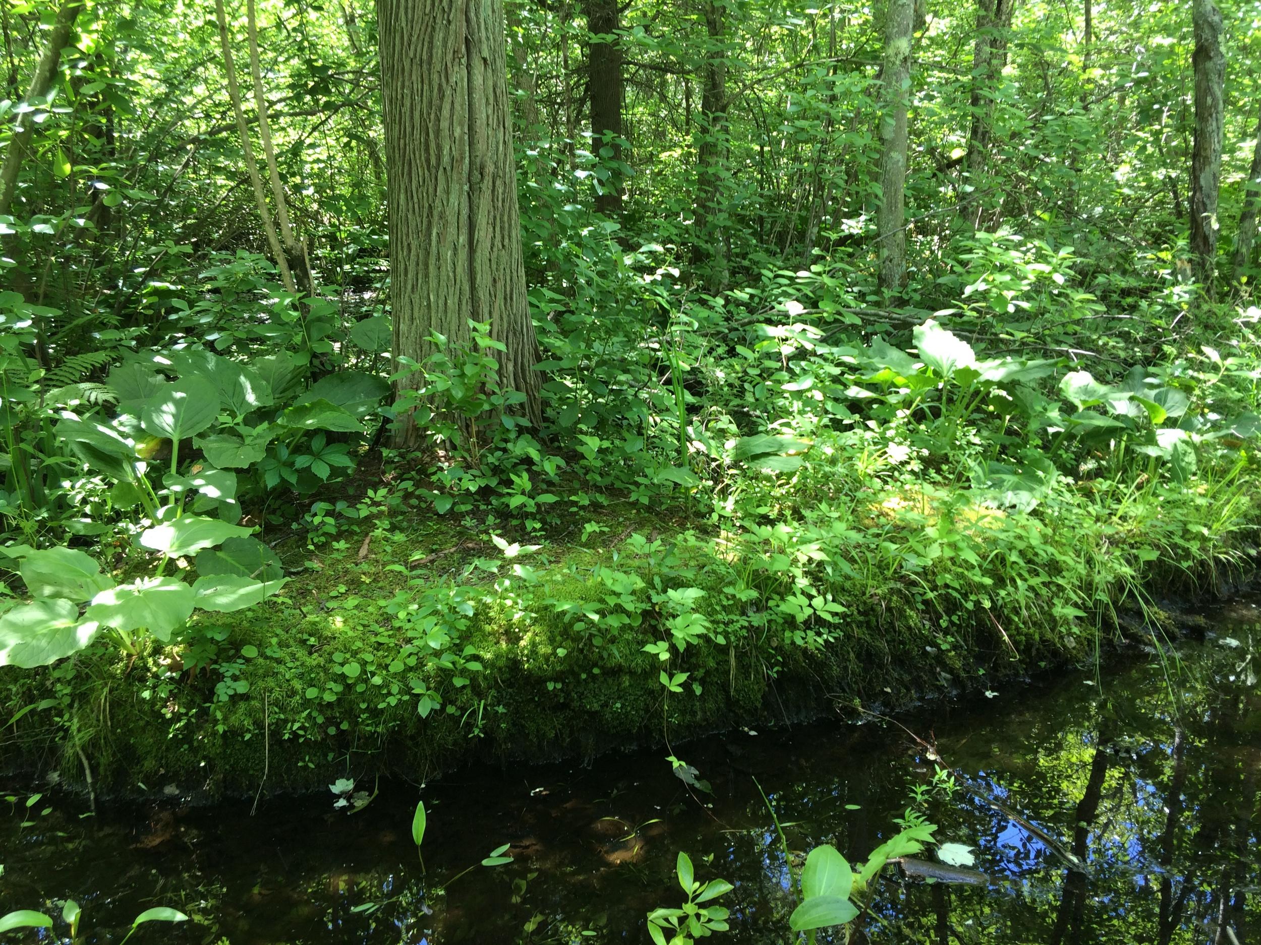 Bartlett Woods