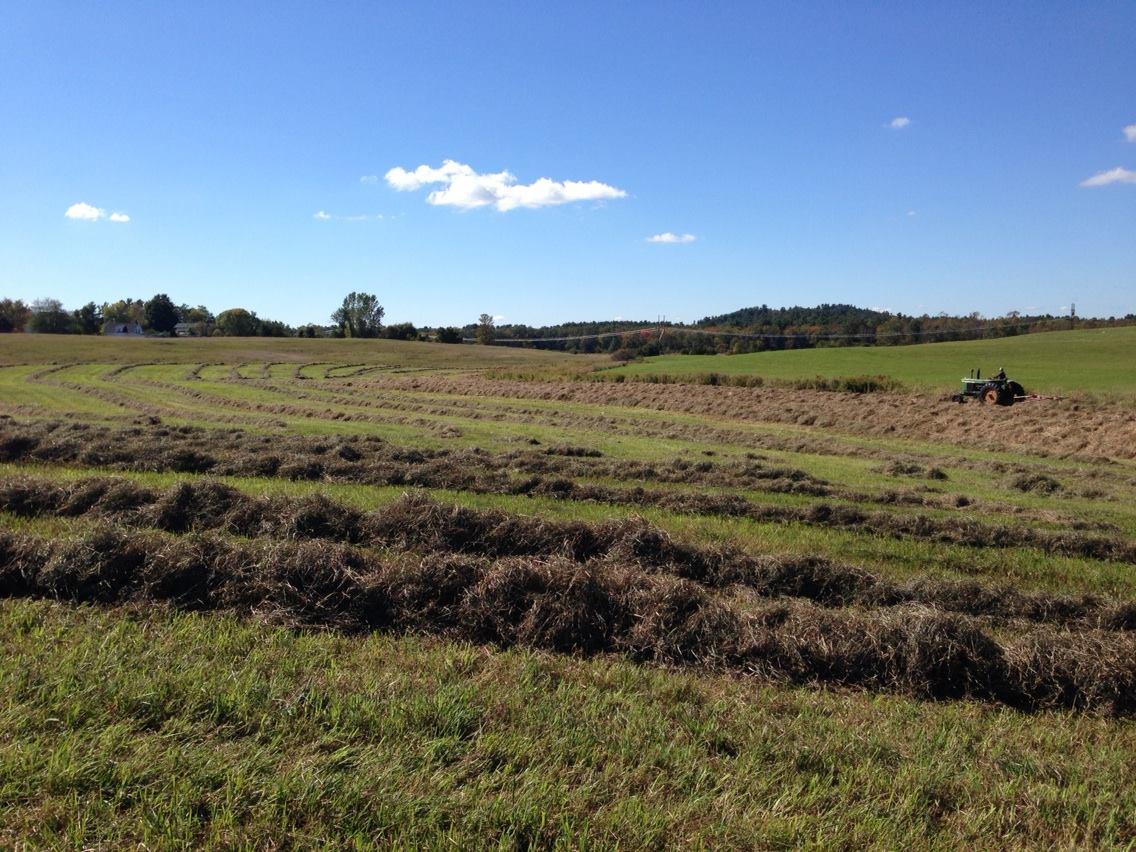Haying at Woodsom Farm