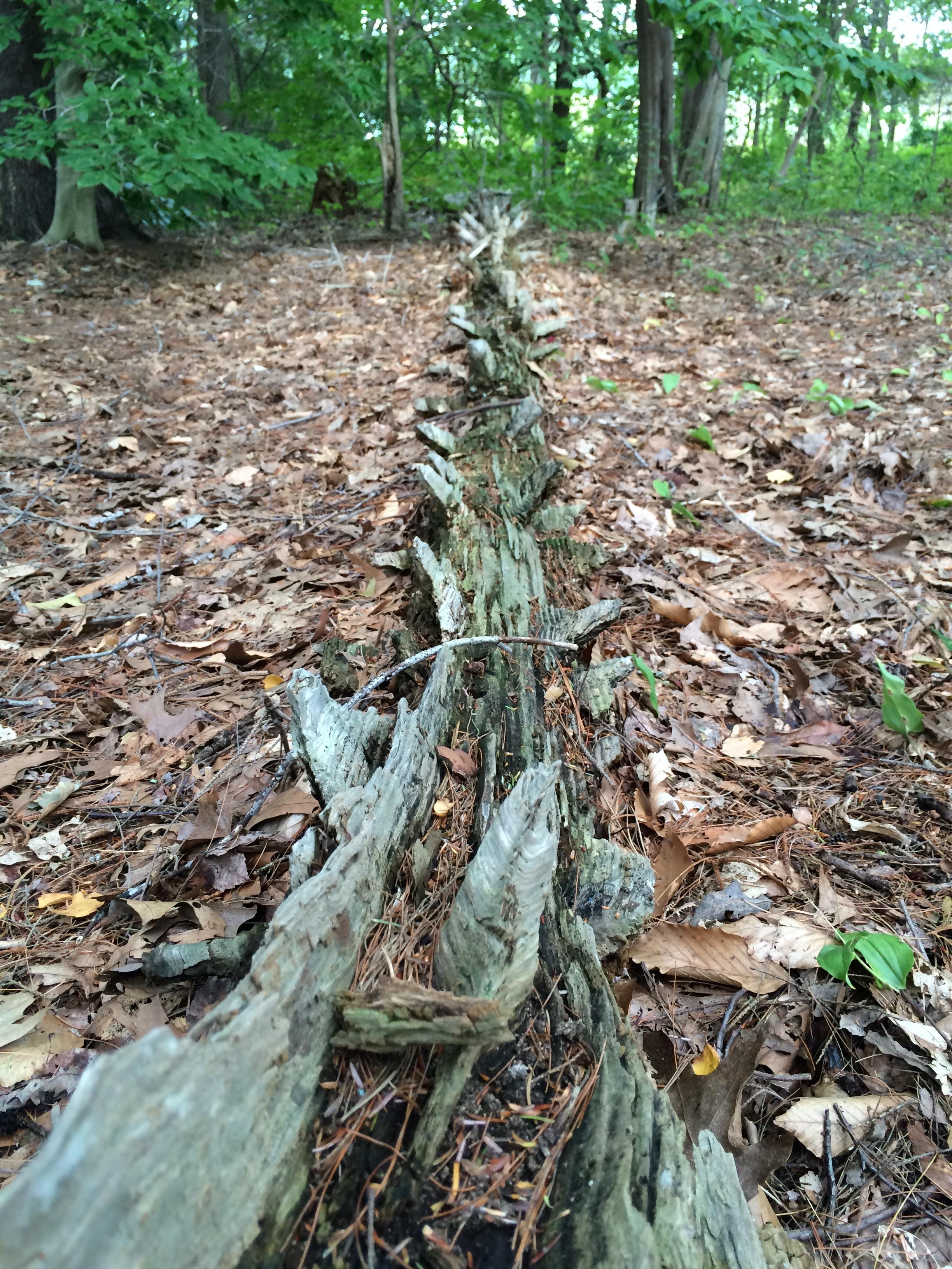 Fallen timber at Deer Island