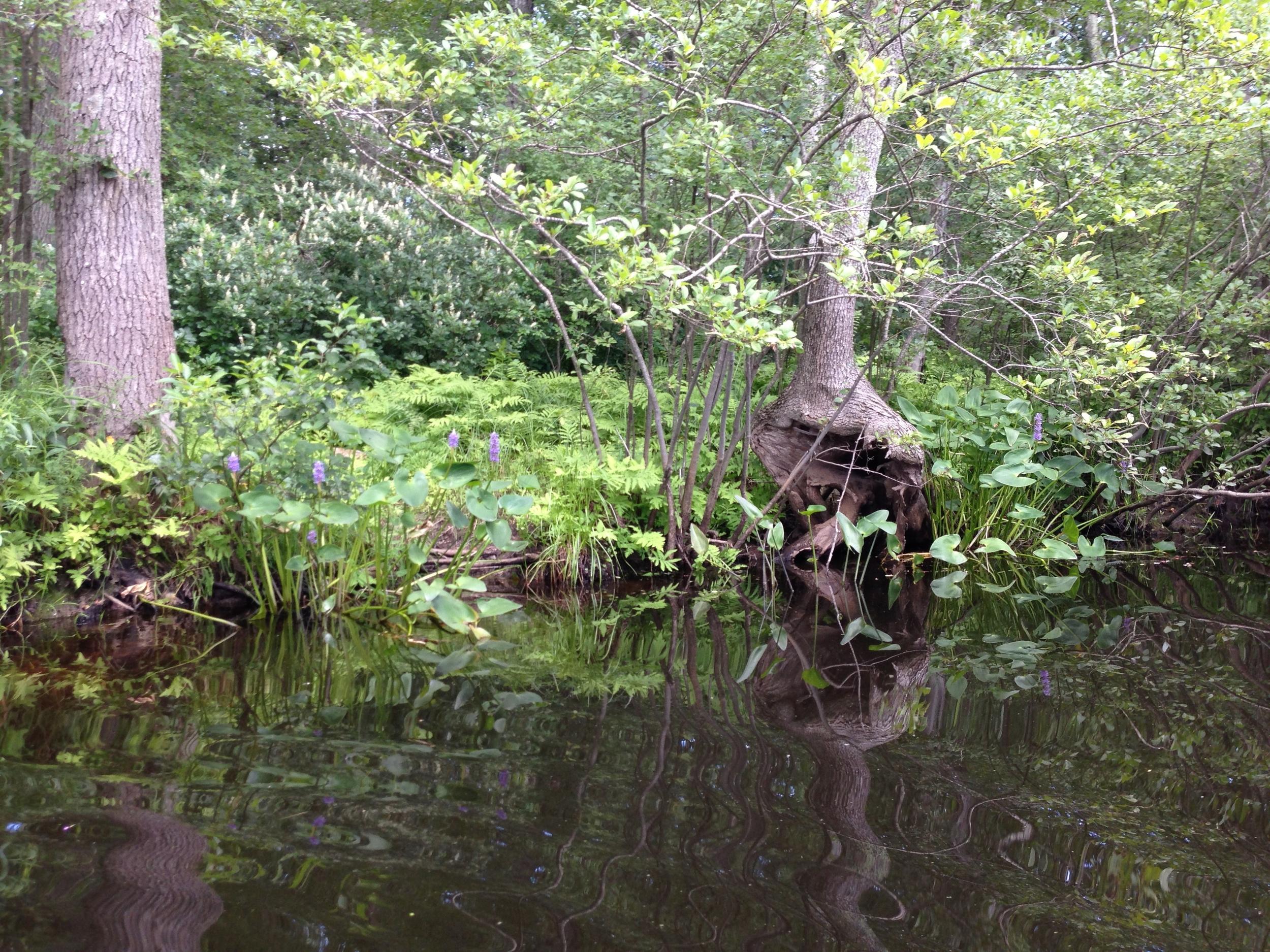 Powow Riverbank