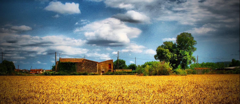 Rural Landscape 1.jpg
