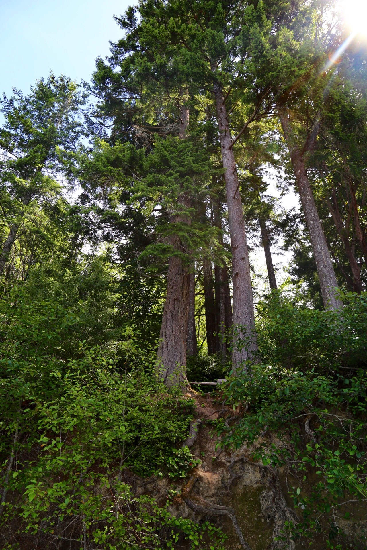 Northwest Pines