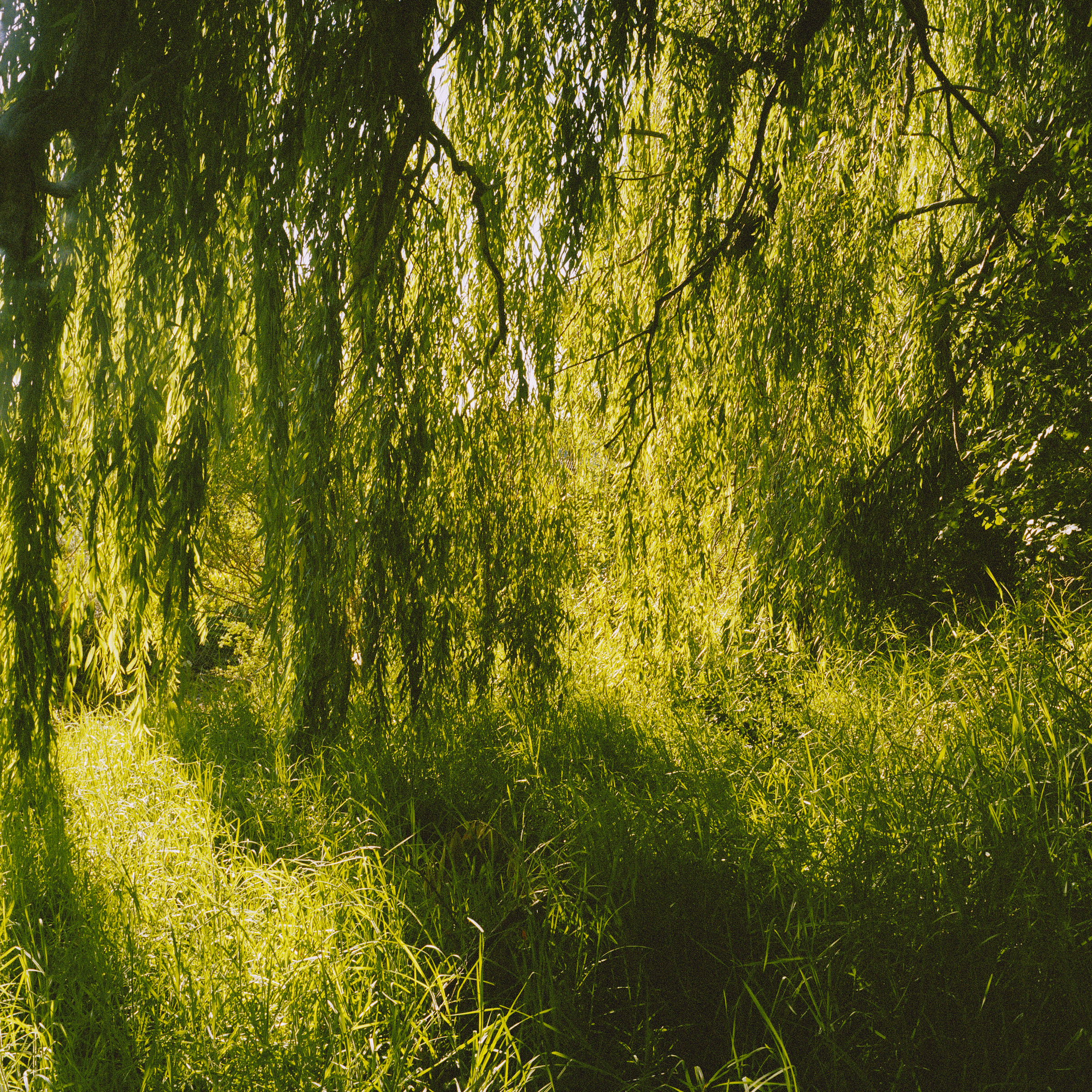 Under the Weeping Willow (2009)