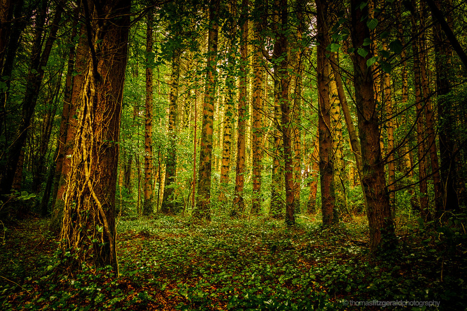 Golden-Light-in-The-Trees