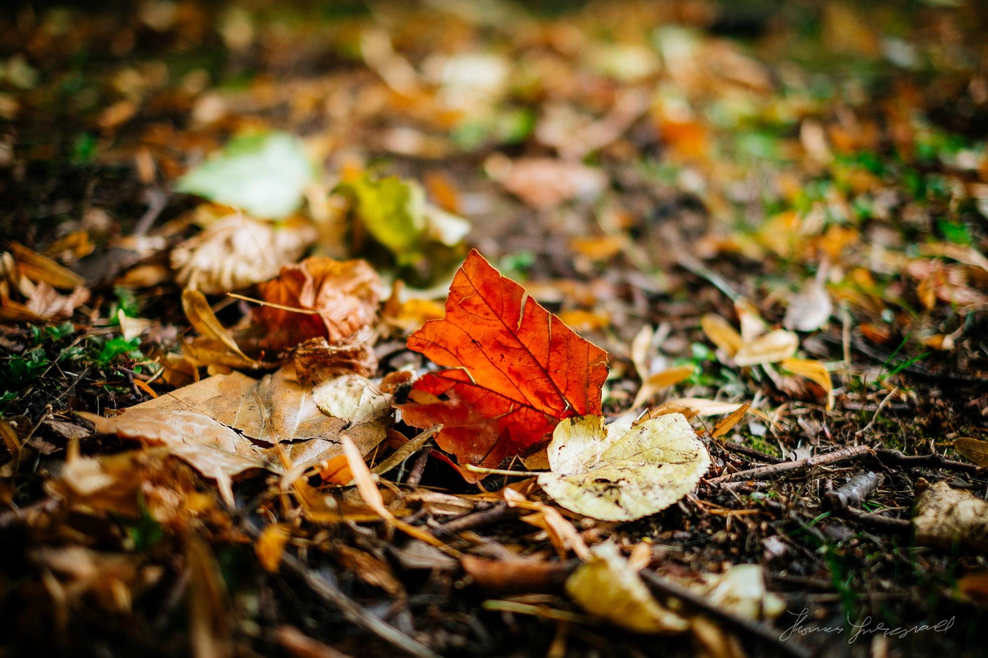 Autumn Leaf - Fuji XE1 + VSCO Film 4