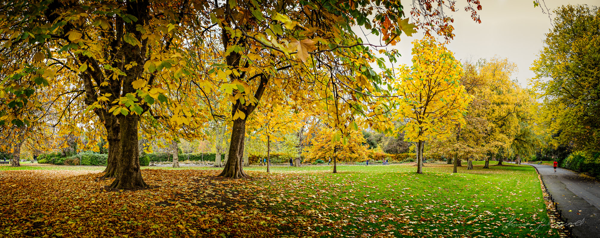 A panorama of the golden trees in Stephen's Green, Dublin