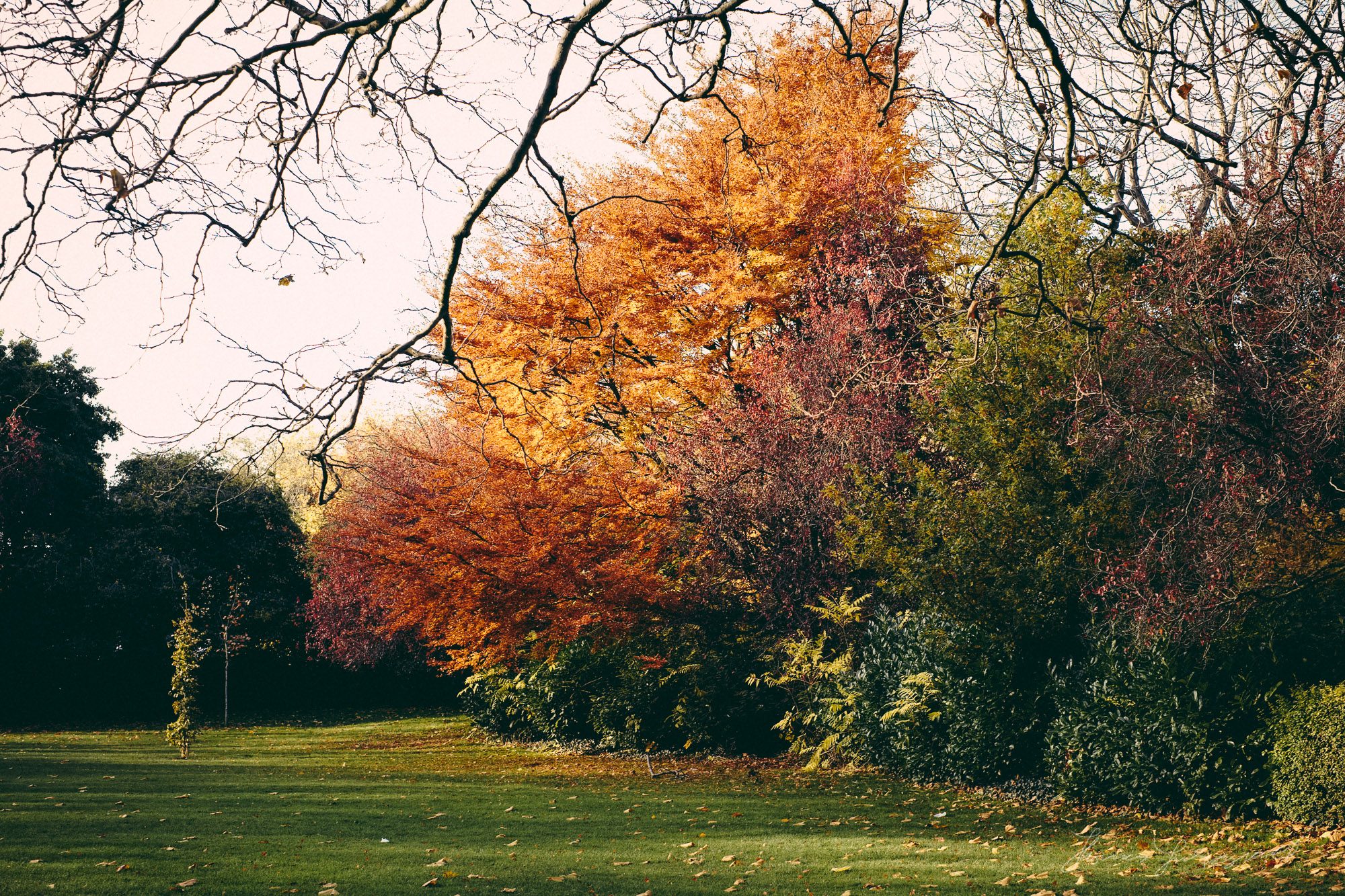 Autumn Colours - Fuji XE1, Processed with Iridient Developer