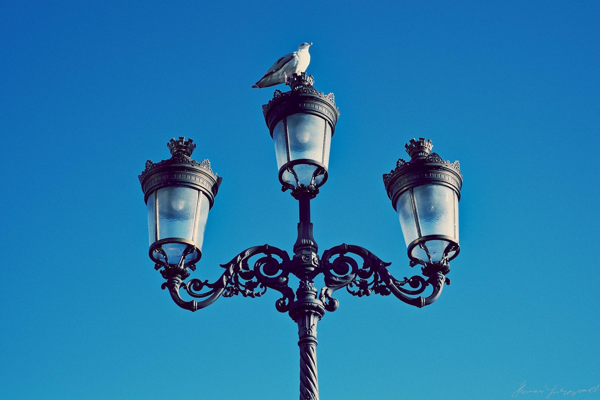 birds-and-lamp-shade