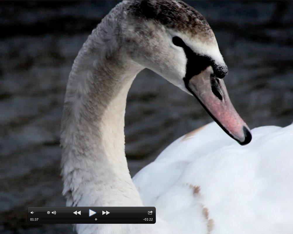 Screen Shot 2014-03-03 at 09.21.32