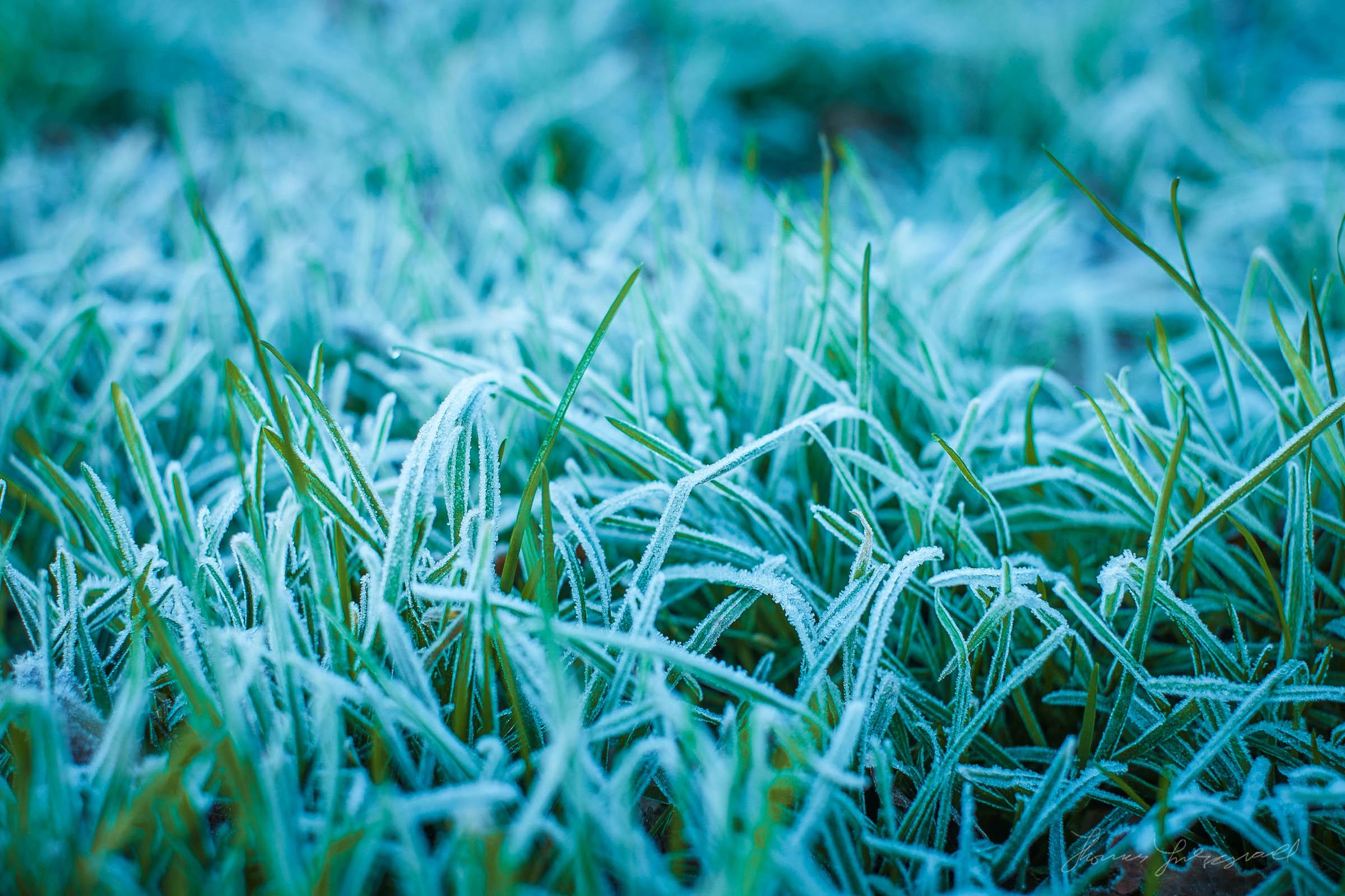 first-frost-03.jpg
