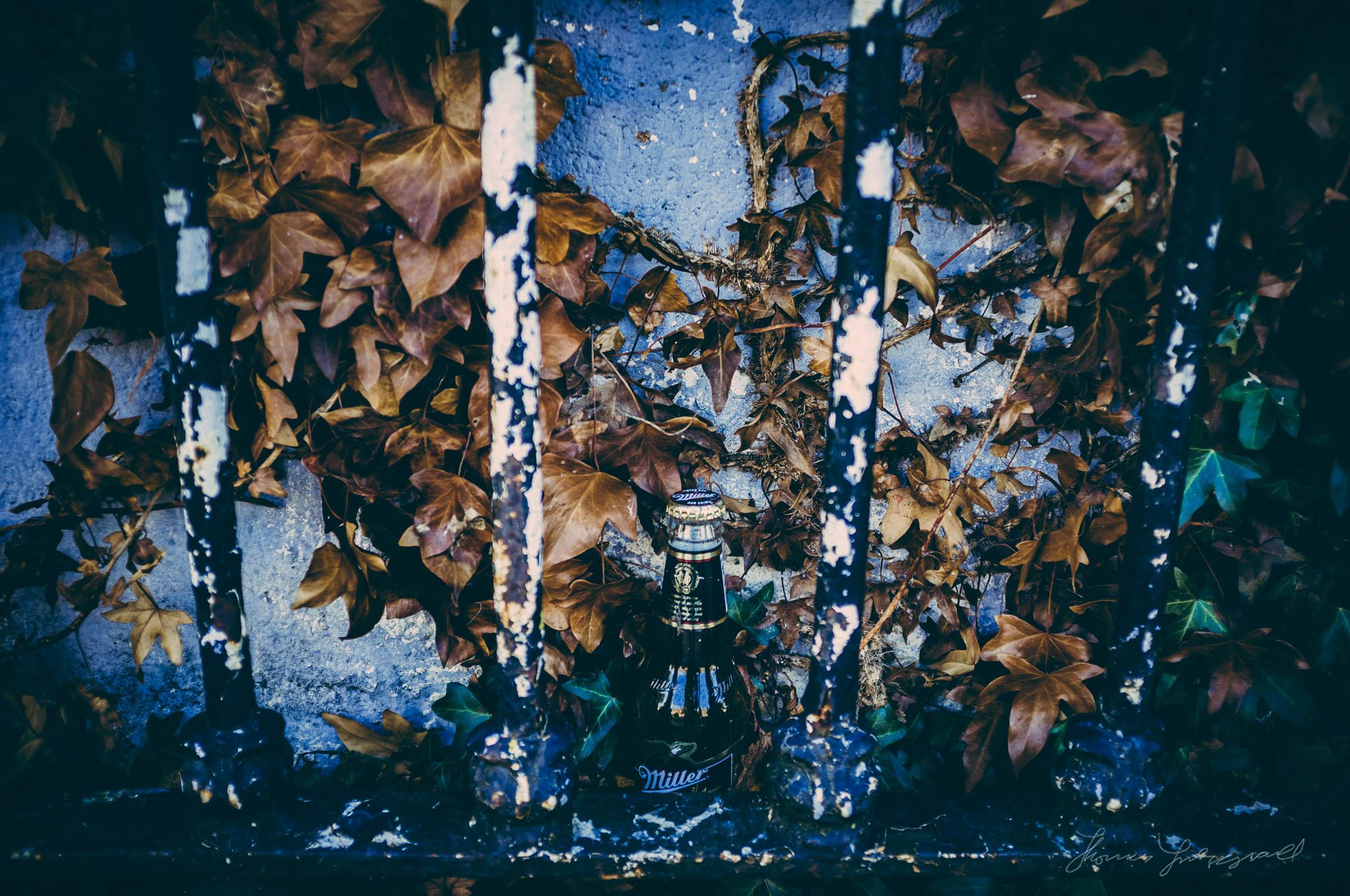 Autumn-In-the-City-01.jpg