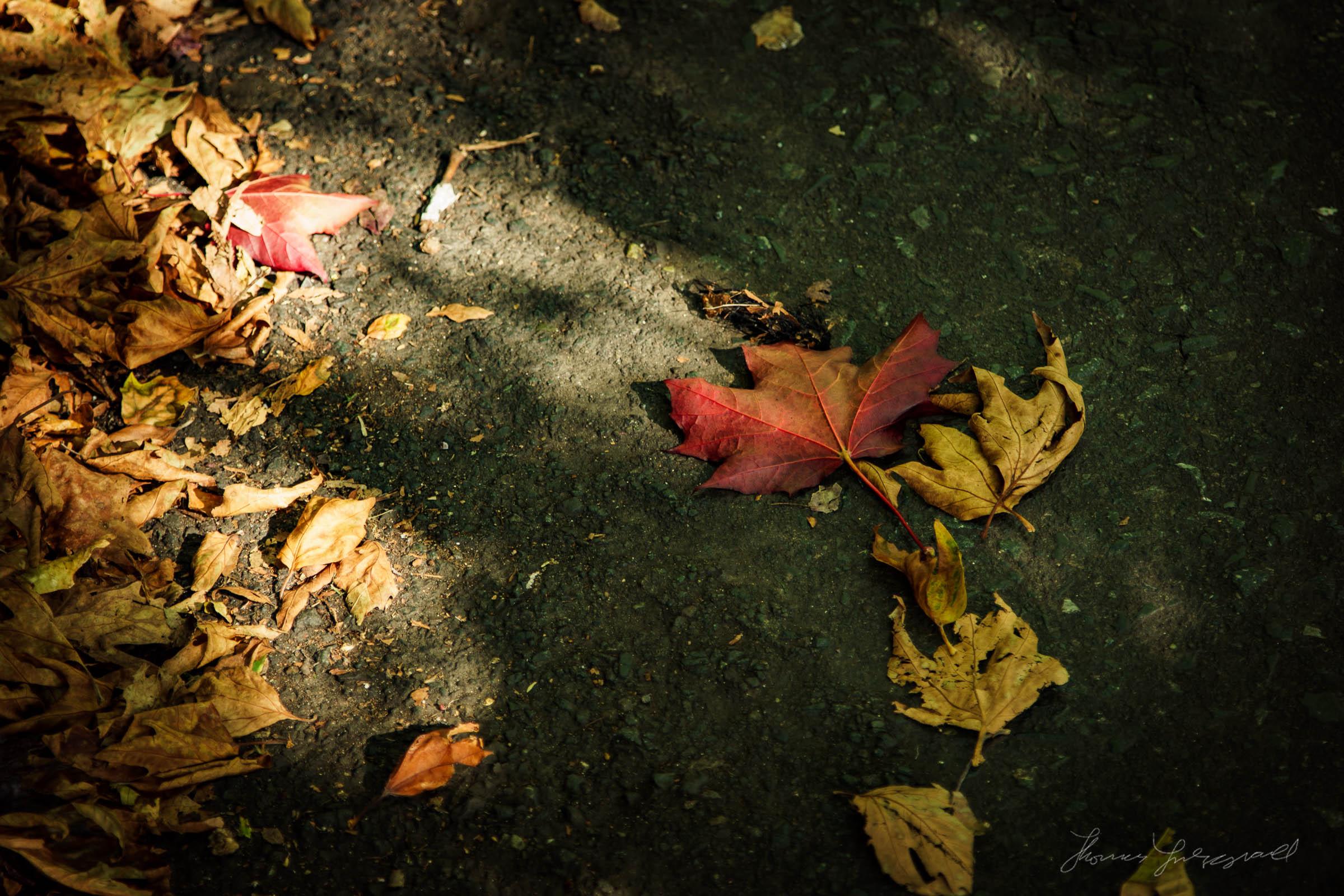 Autumn-Dublin-Sony-A6000-14.jpg