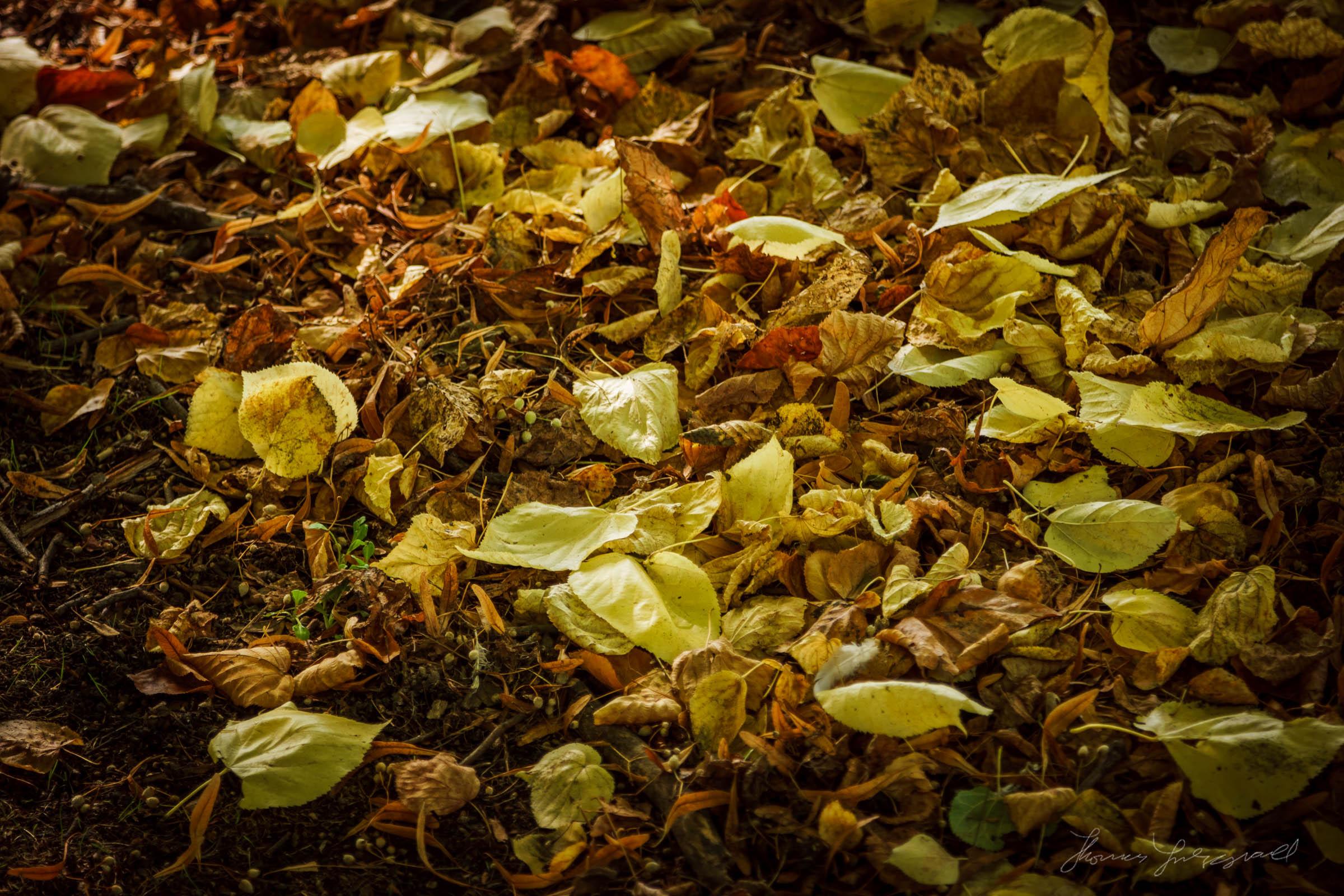Autumn-Dublin-Sony-A6000-15.jpg