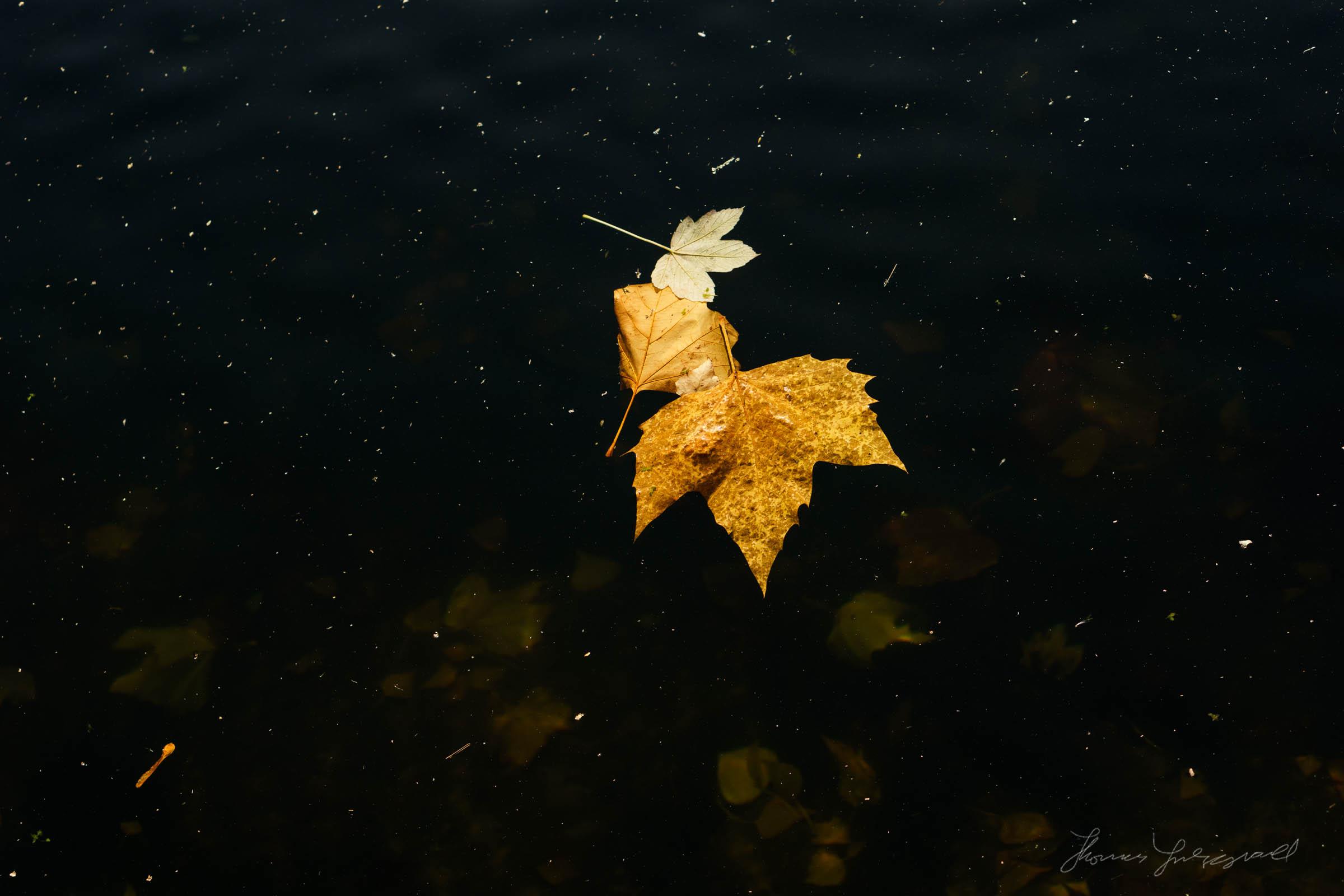 Autumn-Dublin-Sony-A6000-39.jpg