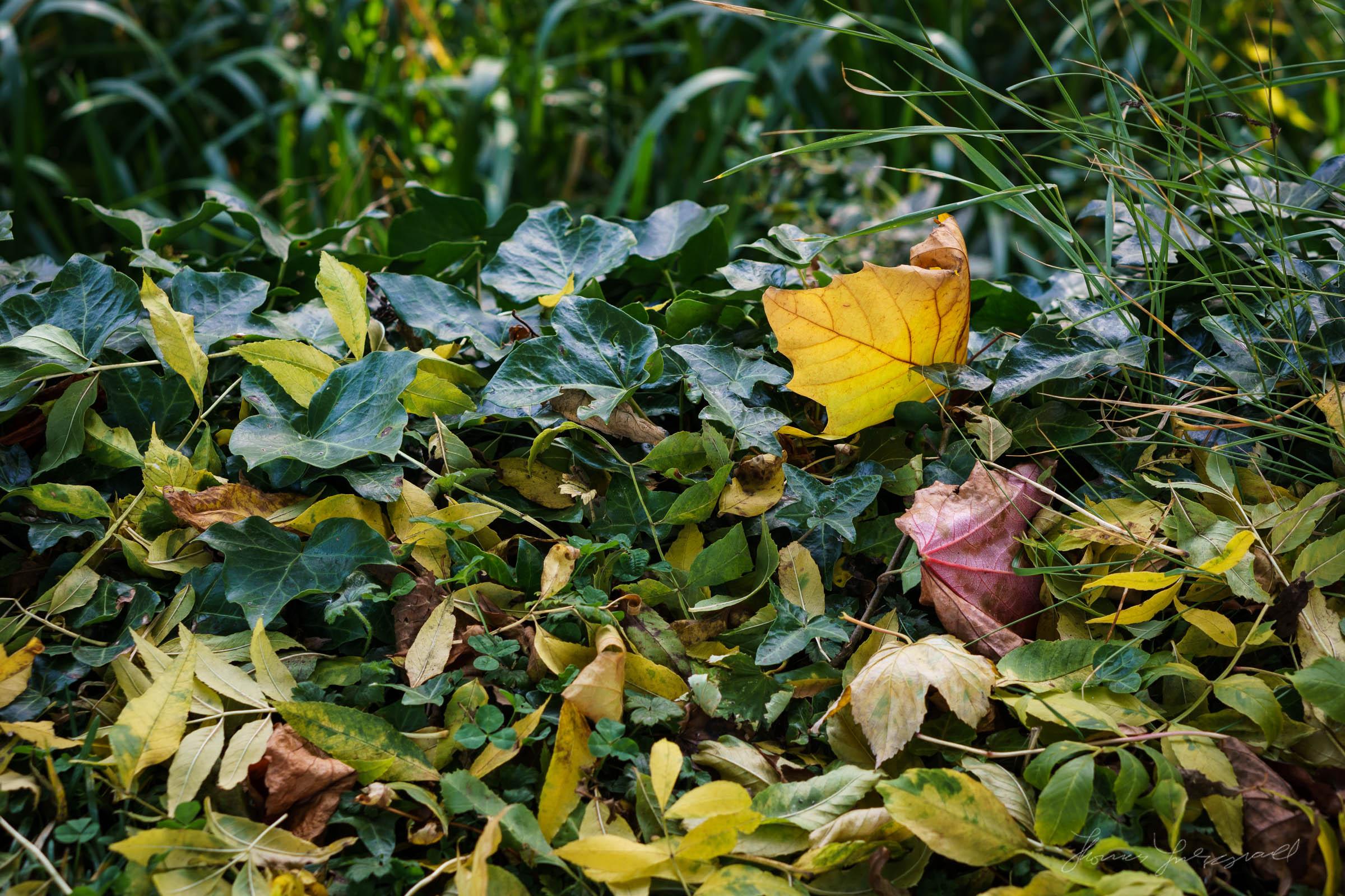 Autumn-Dublin-Sony-A6000-47.jpg