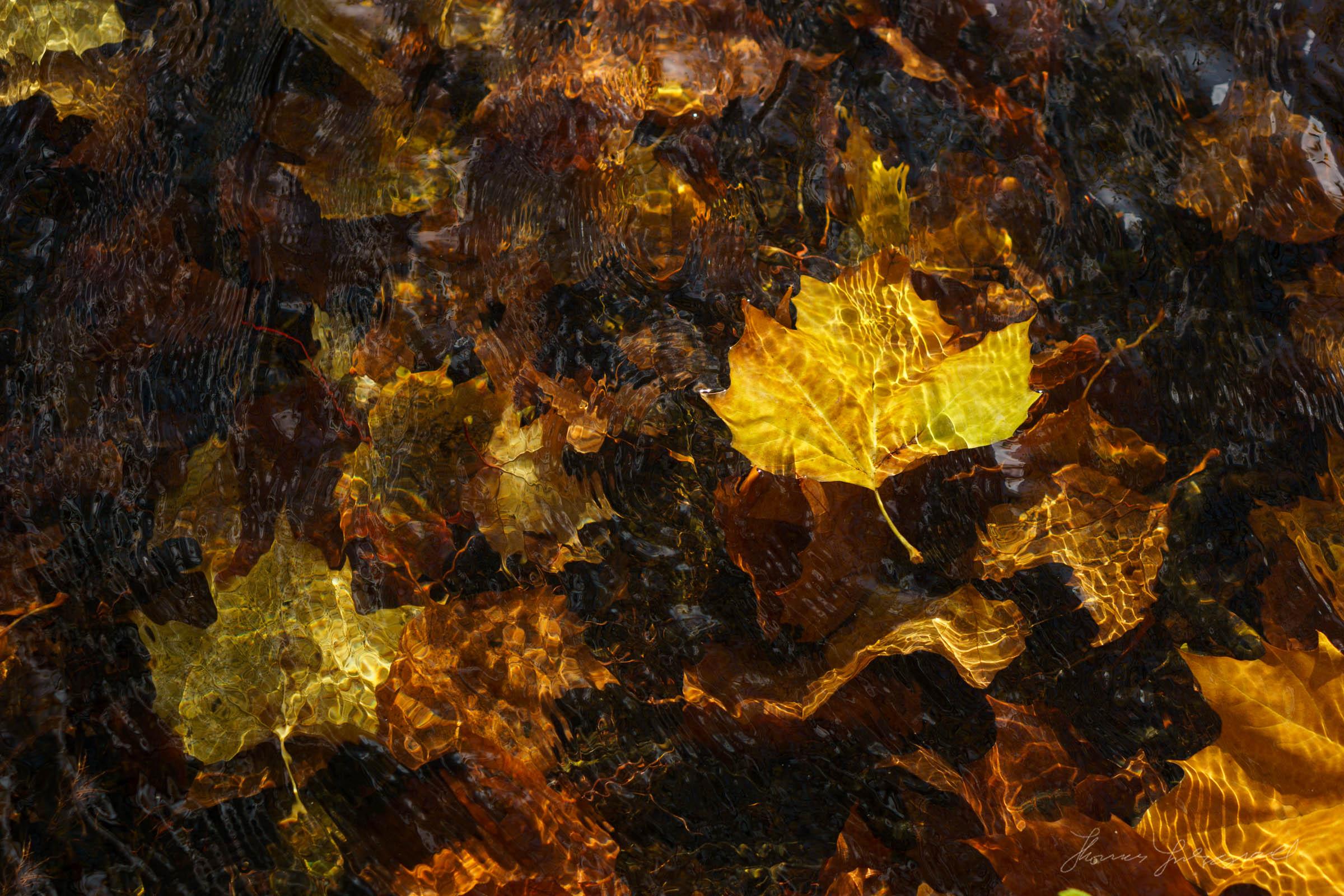 Autumn-Dublin-Sony-A6000-67.jpg