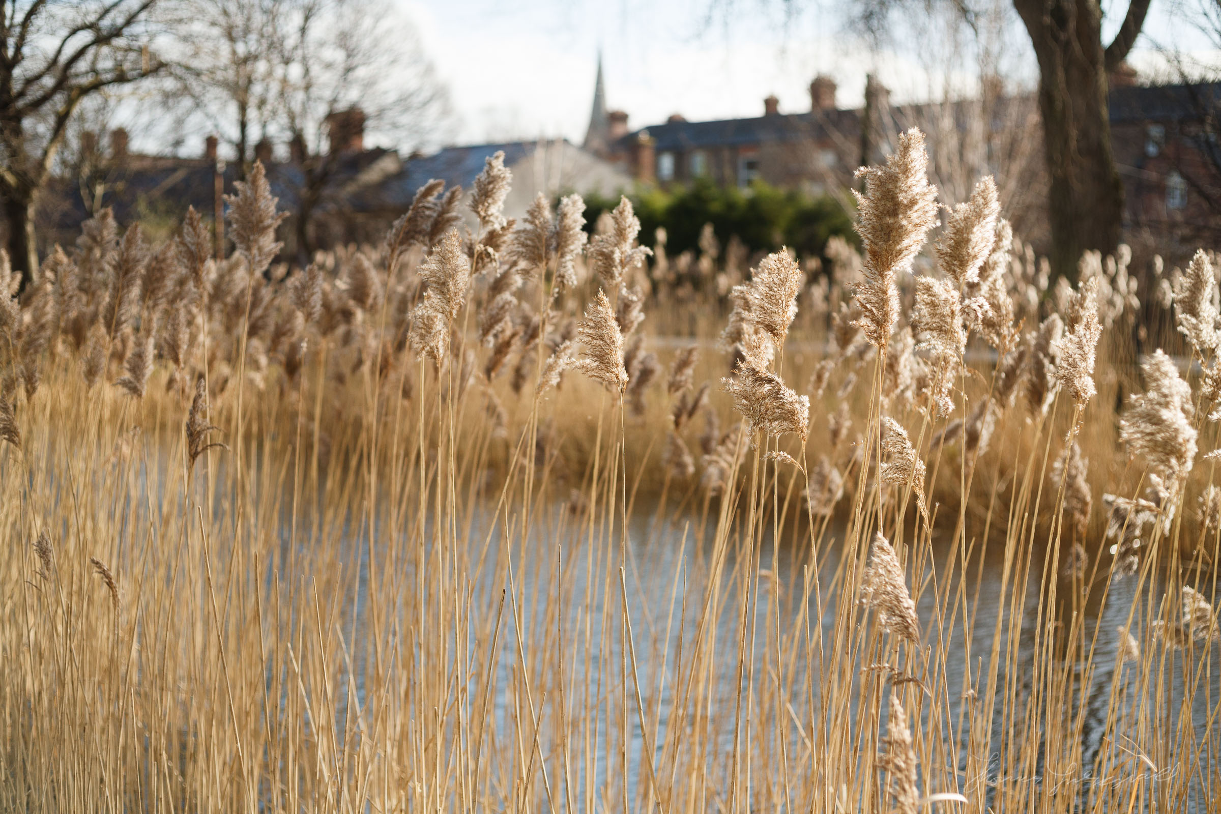 Reeds with the Canon 5D Mark 1
