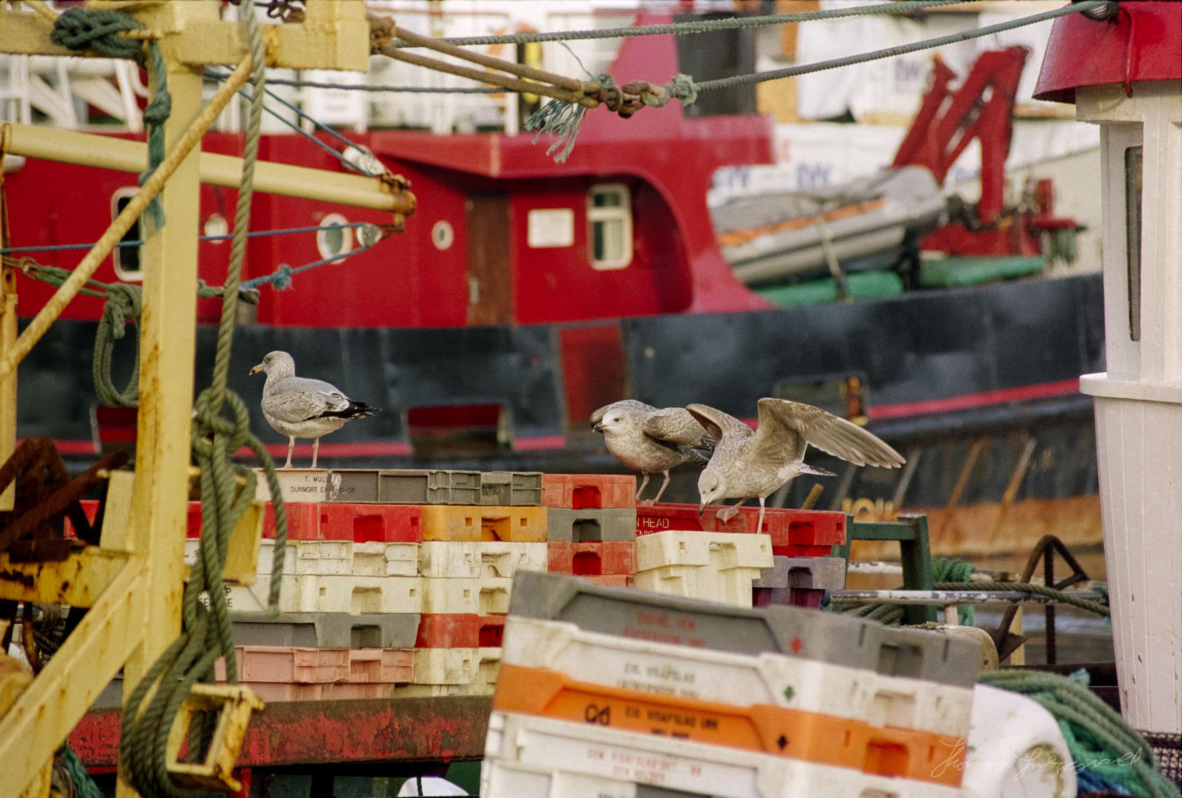wicklow-boats3.jpg