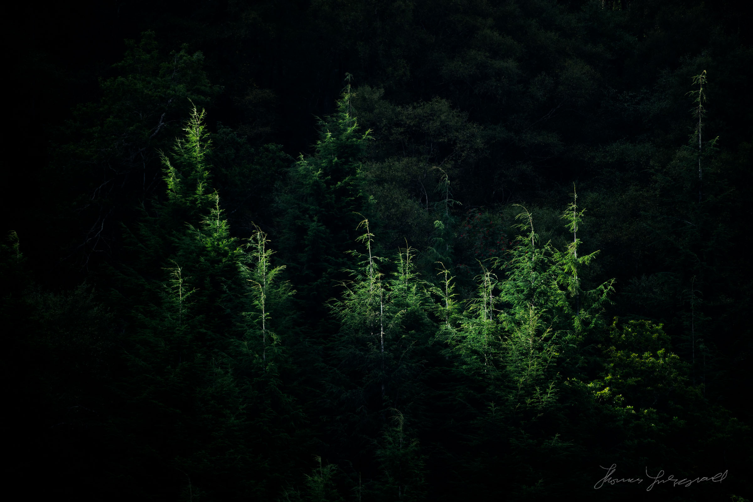 Trees in Glendalough, Ireland , With the Sony A7II