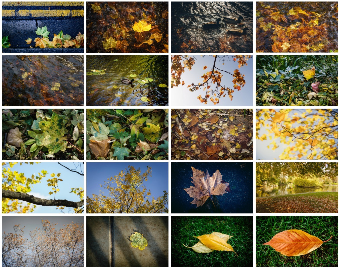 Autumn Wallpaper Pack by Thomas Fitzgerald Photography