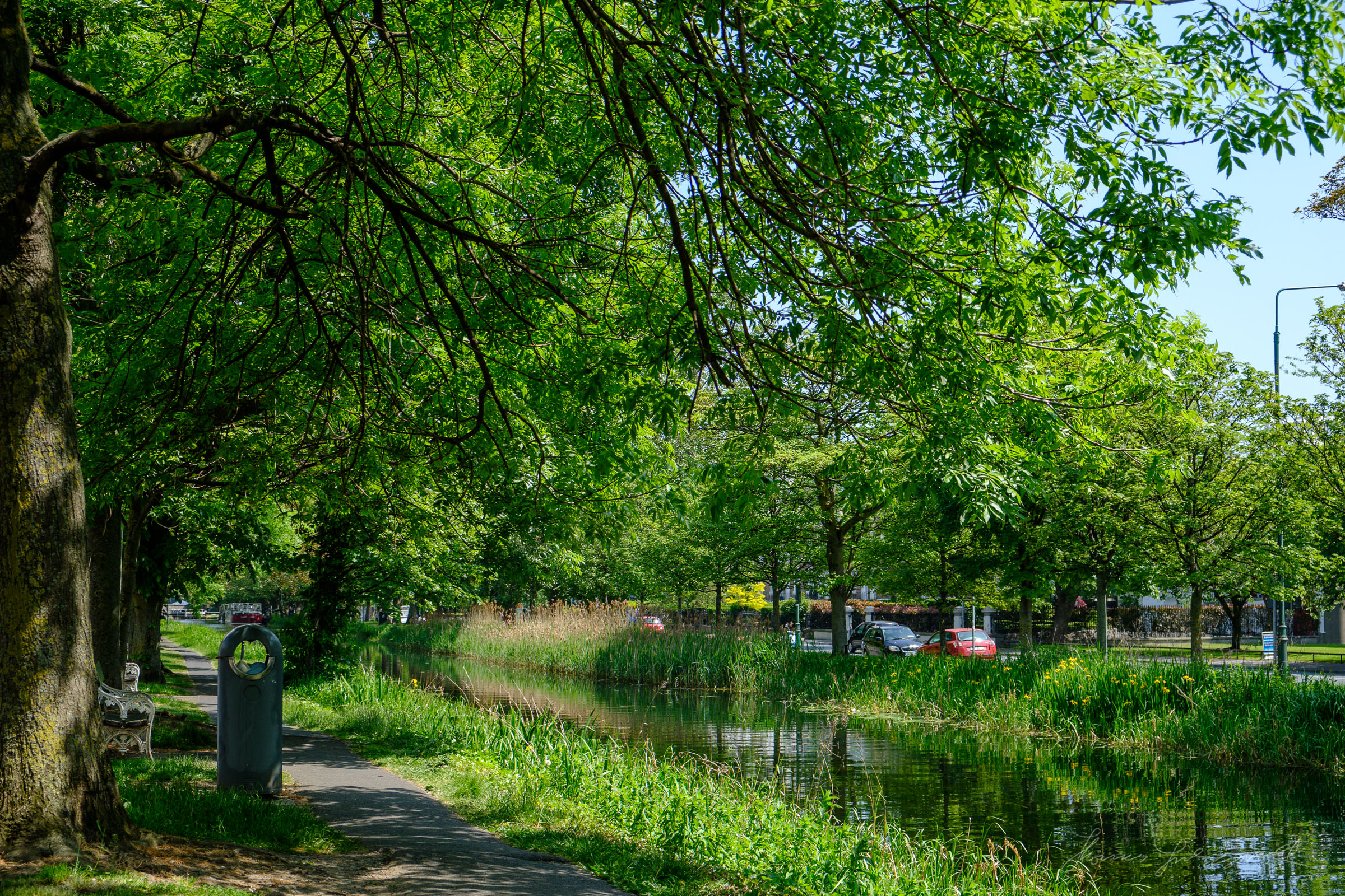 Canopy of Trees over the Canal Image from Fuji X-Pro 2 converted with Iridient X-Transformer