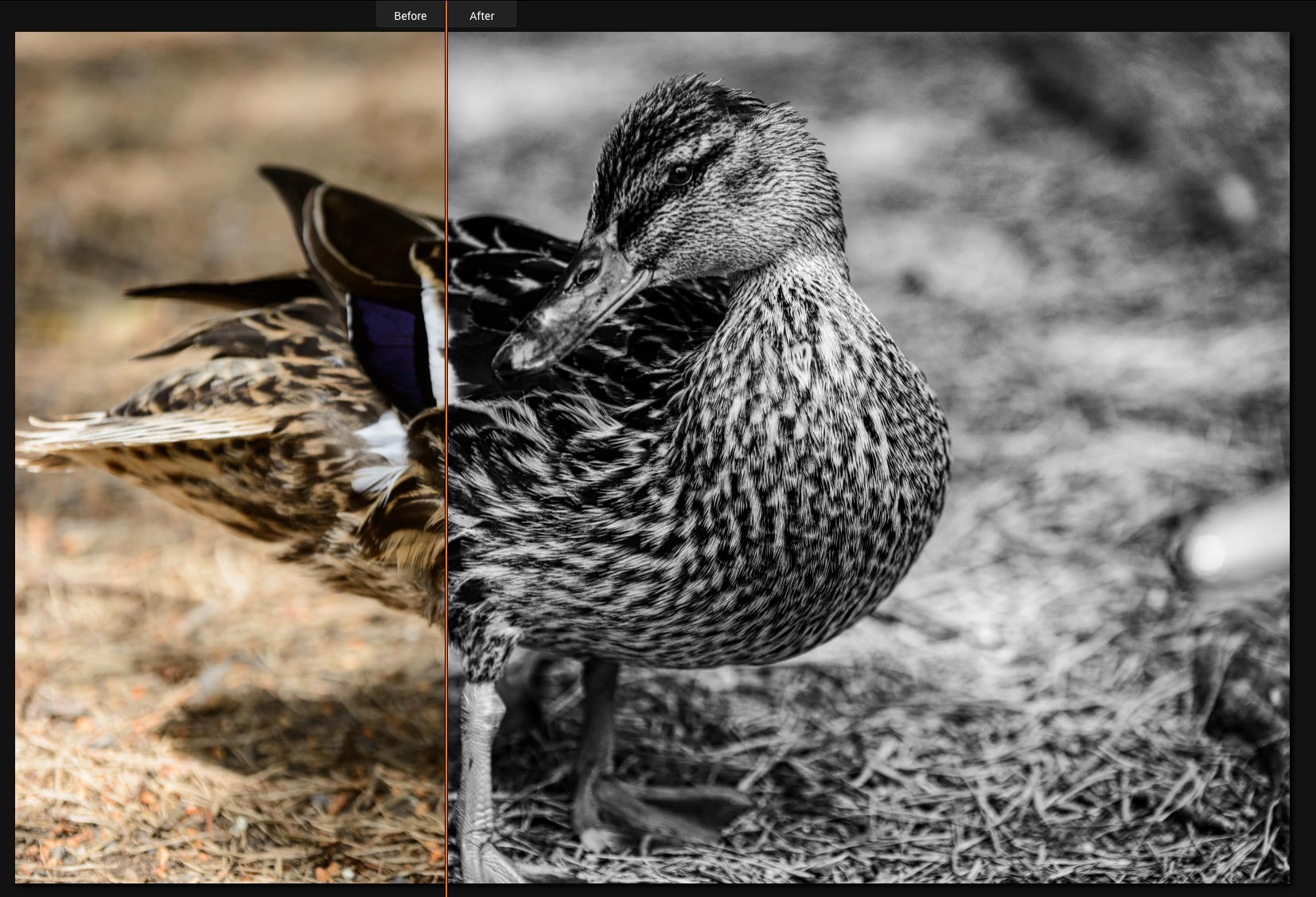Luminar-Before-After