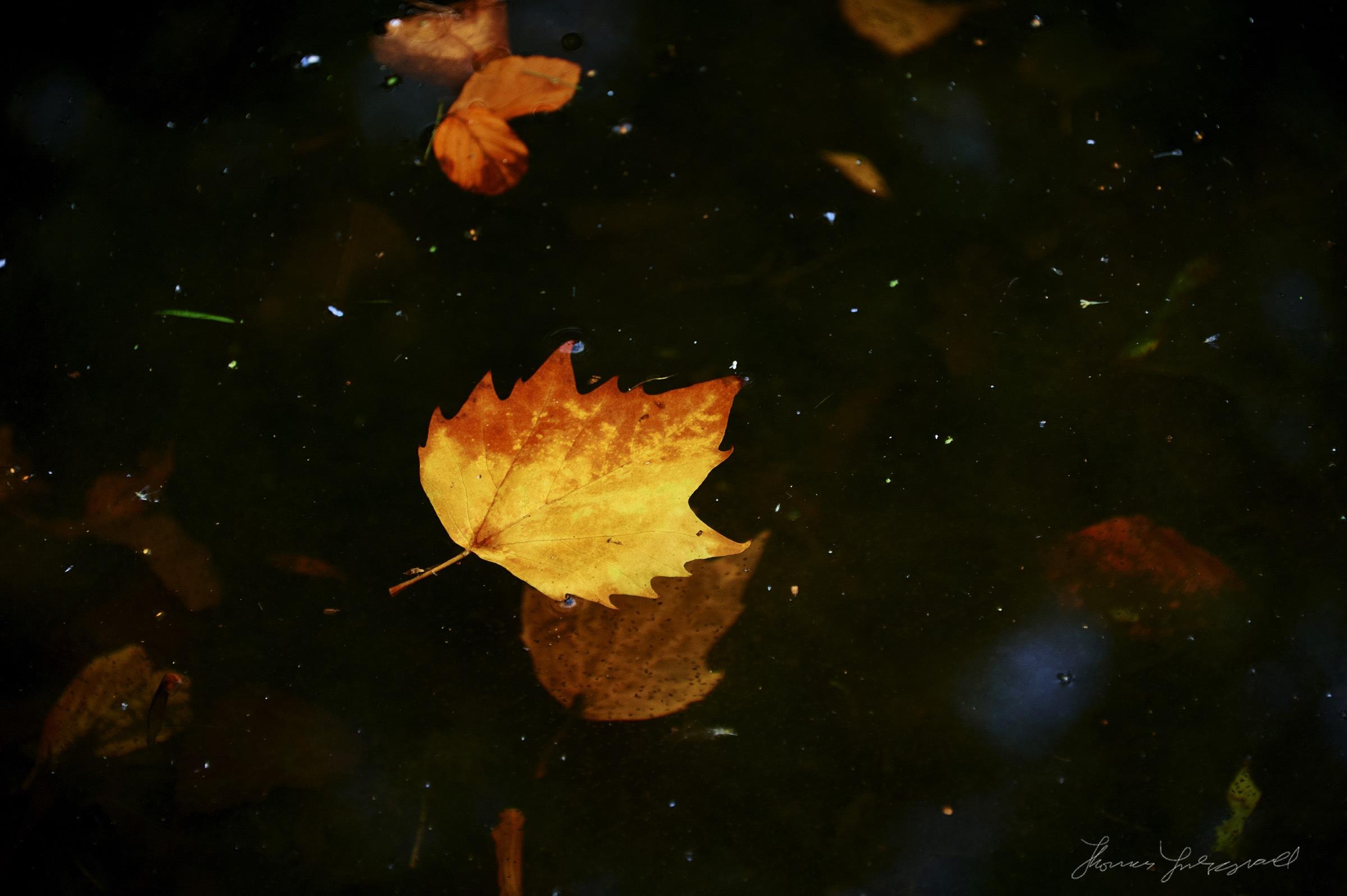 Autumn-Colours-2017-02.jpg