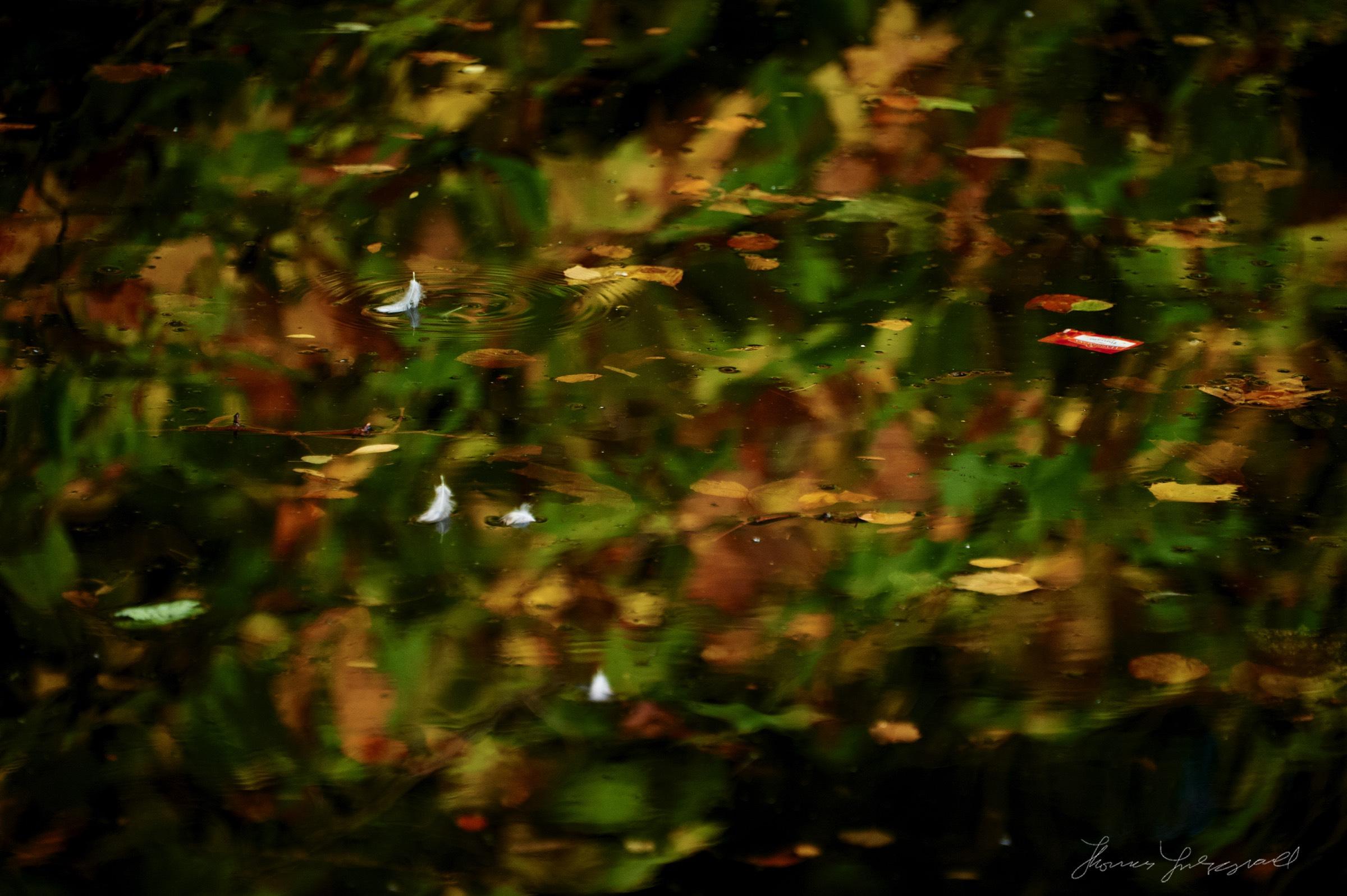 Autumn-Colours-2017-01.jpg