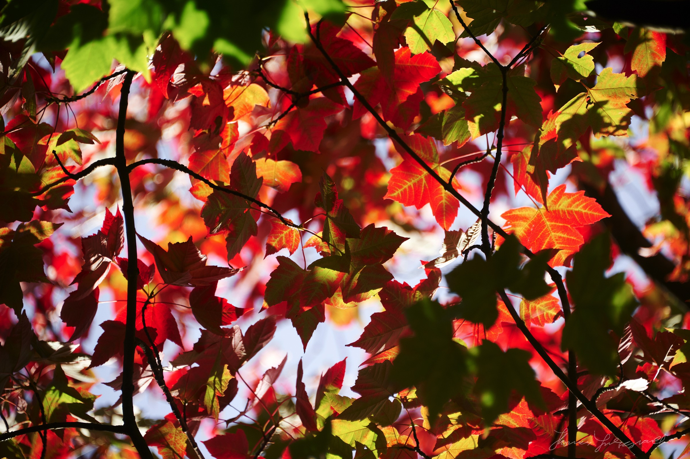 Autumn-Colours-2017-04.jpg