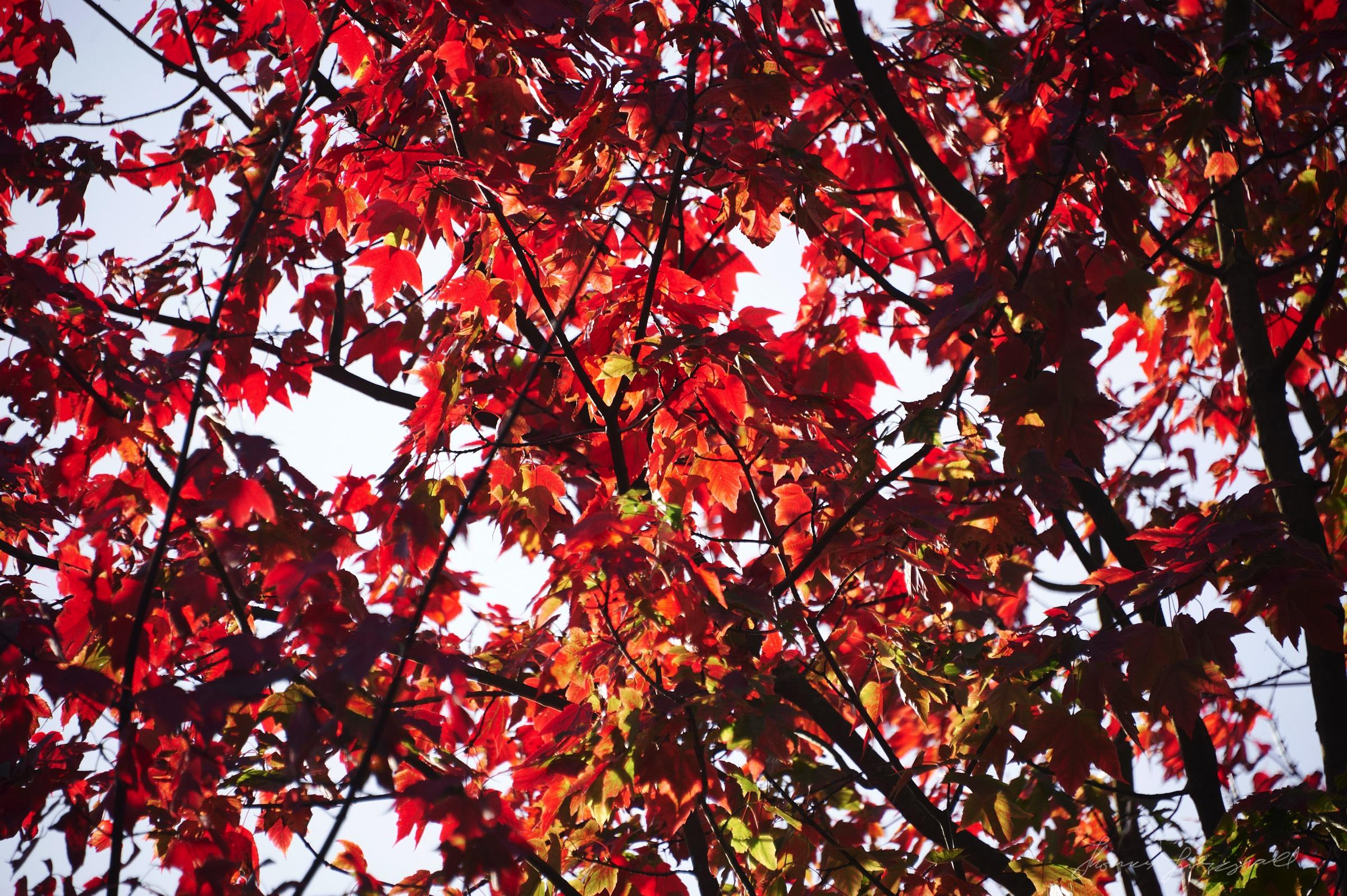 Autumn-Colours-2017-05.jpg