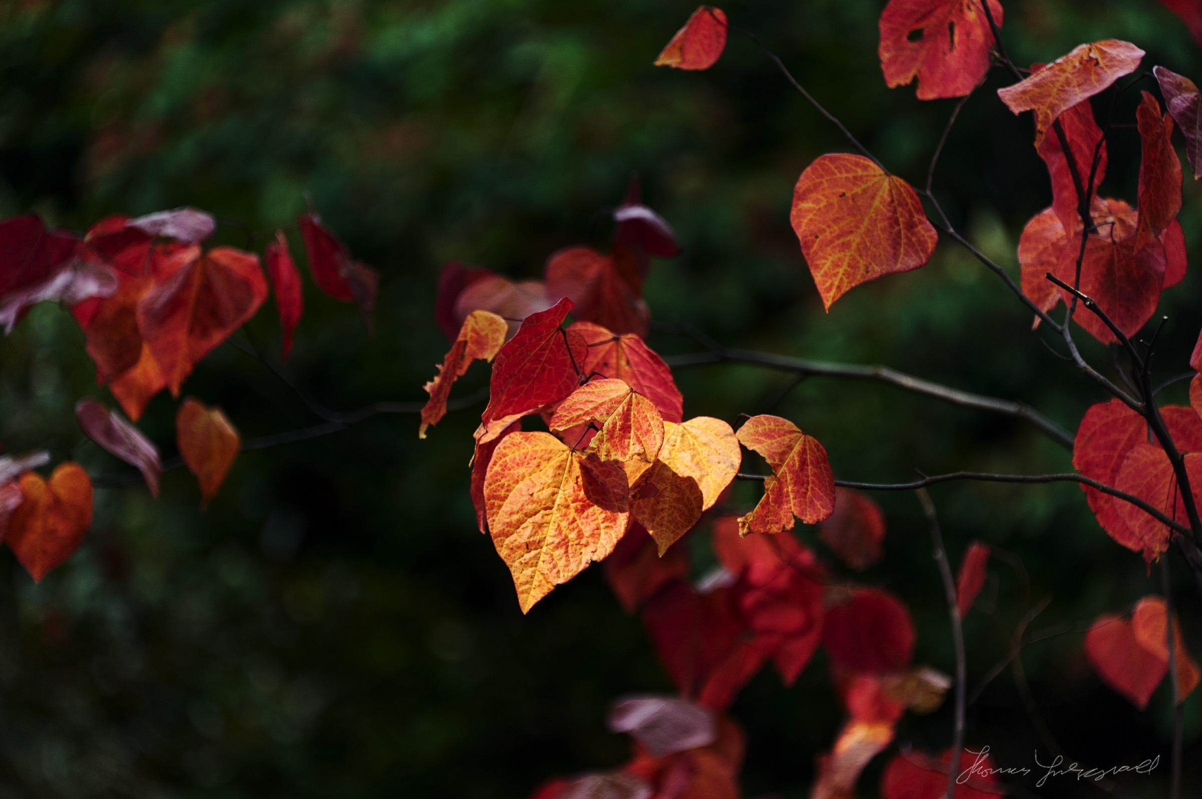 Autumn-Colours-2017-11.jpg