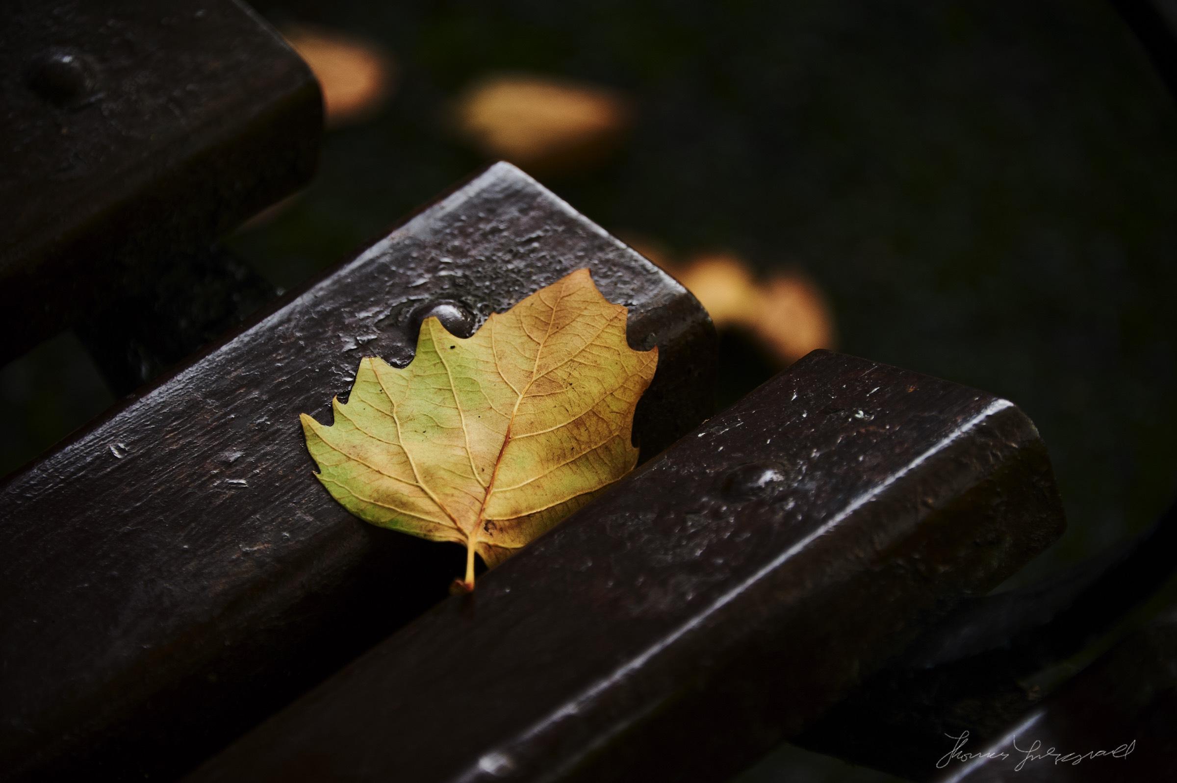 Autumn-Colours-2017-13.jpg