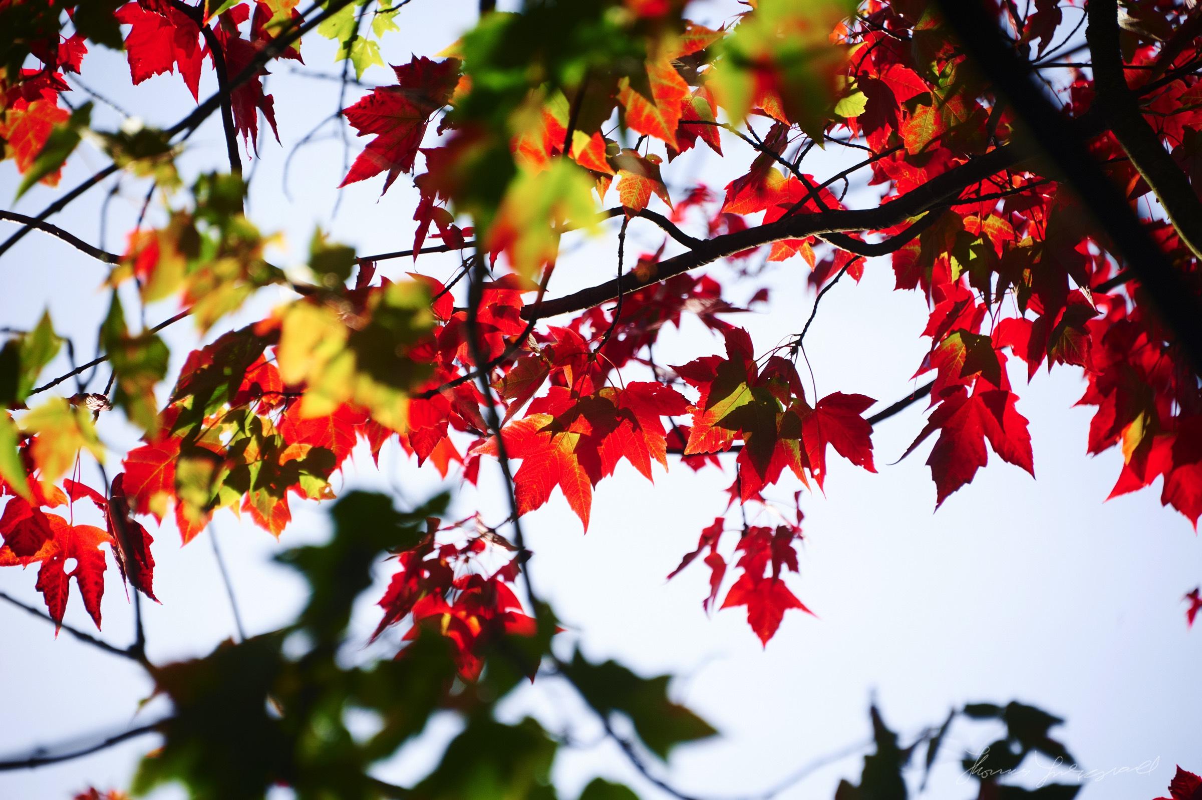 Autumn-Colours-2017-16.jpg