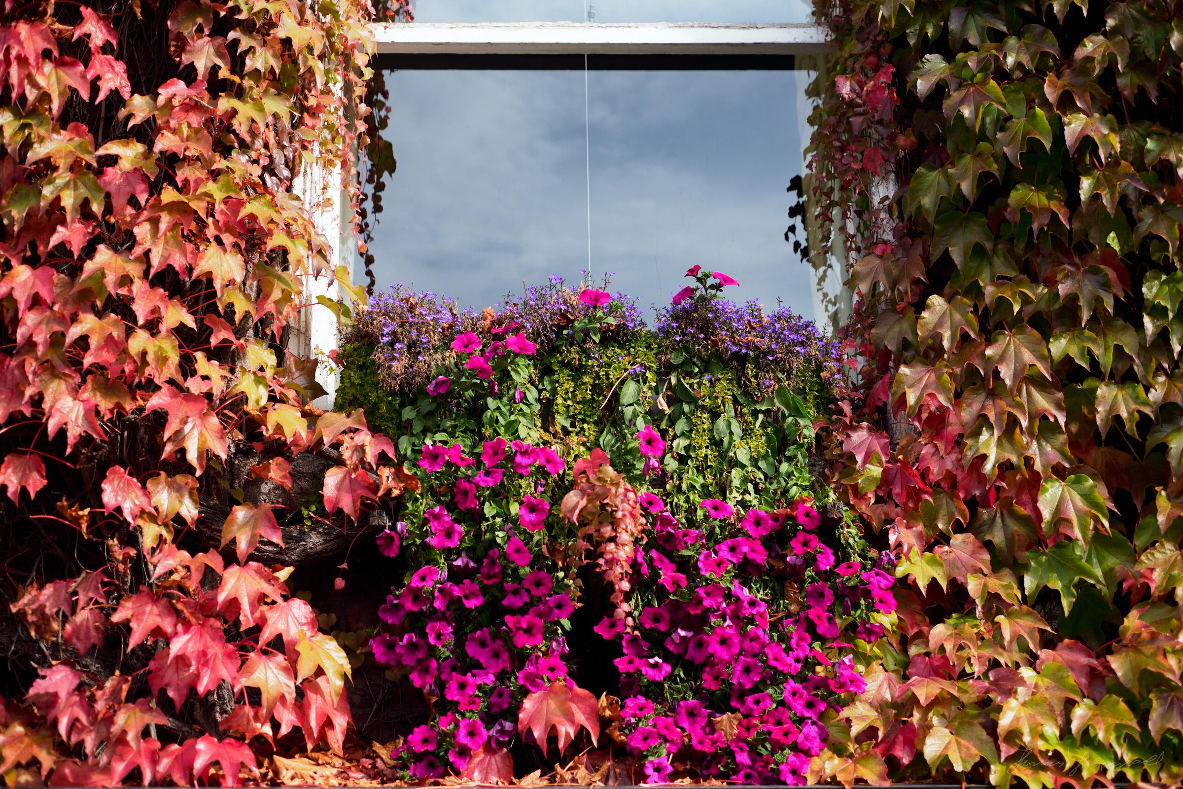 Street-and-park-autumn-378-Jpeg for Web.jpg