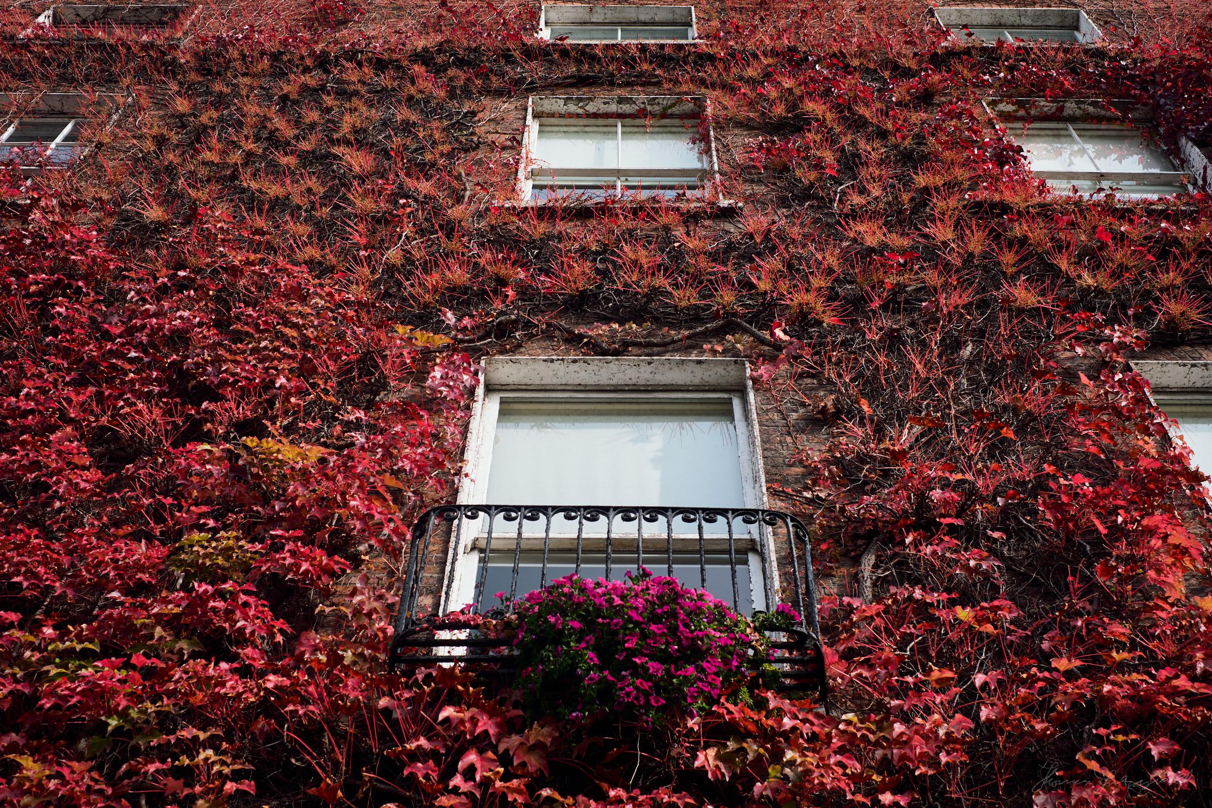 Street-and-park-autumn-380-Jpeg for Web.jpg