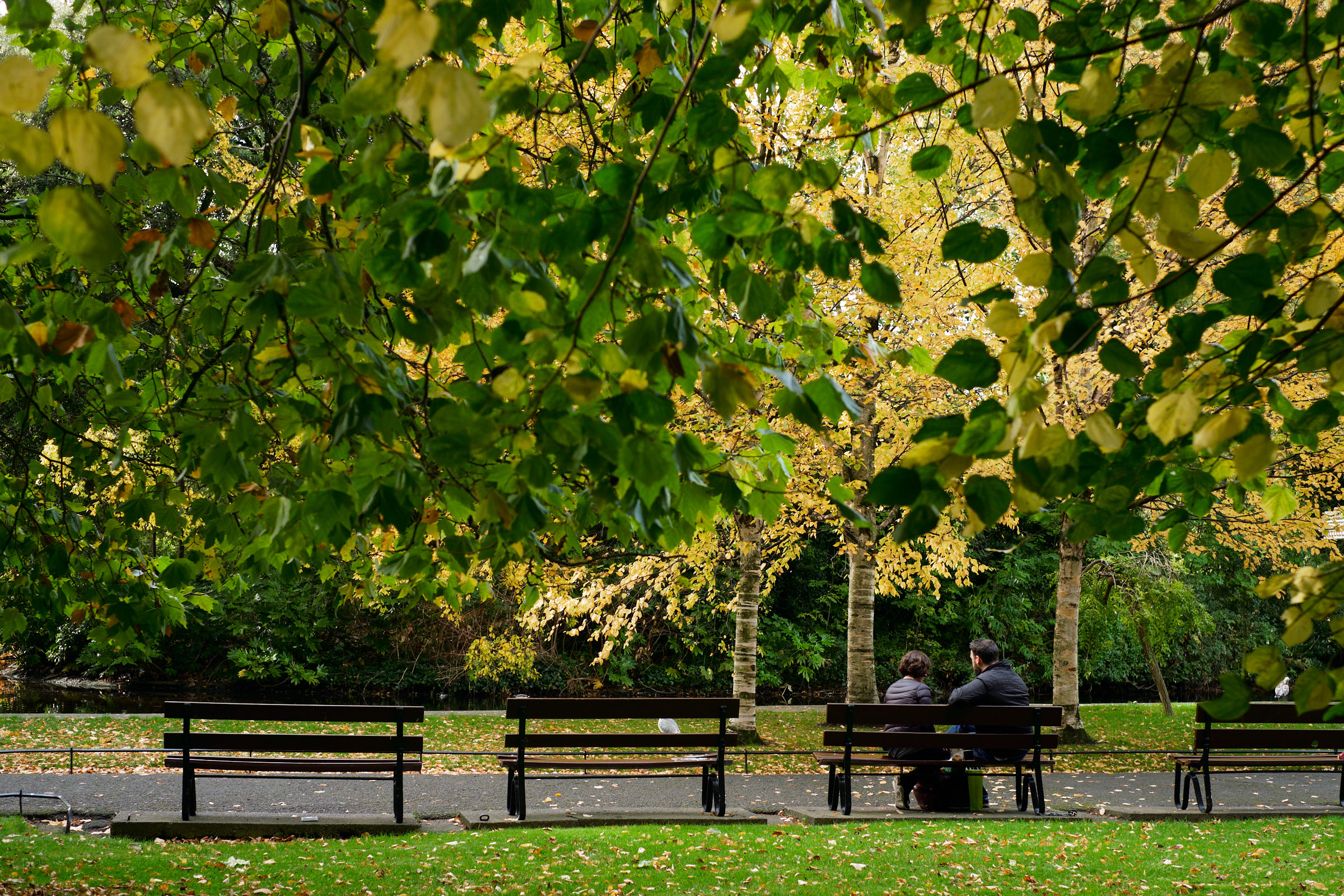 Street-and-park-autumn-384-Jpeg for Web.jpg