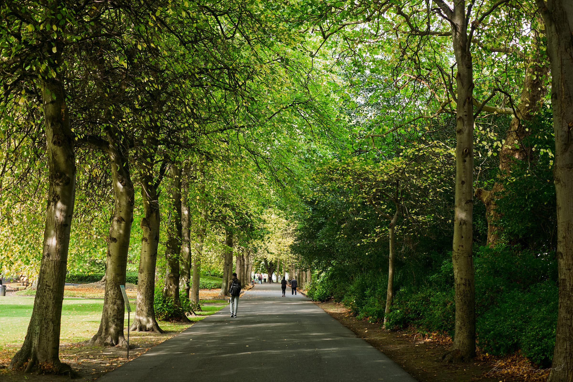 Street-and-park-autumn-385-Jpeg for Web.jpg