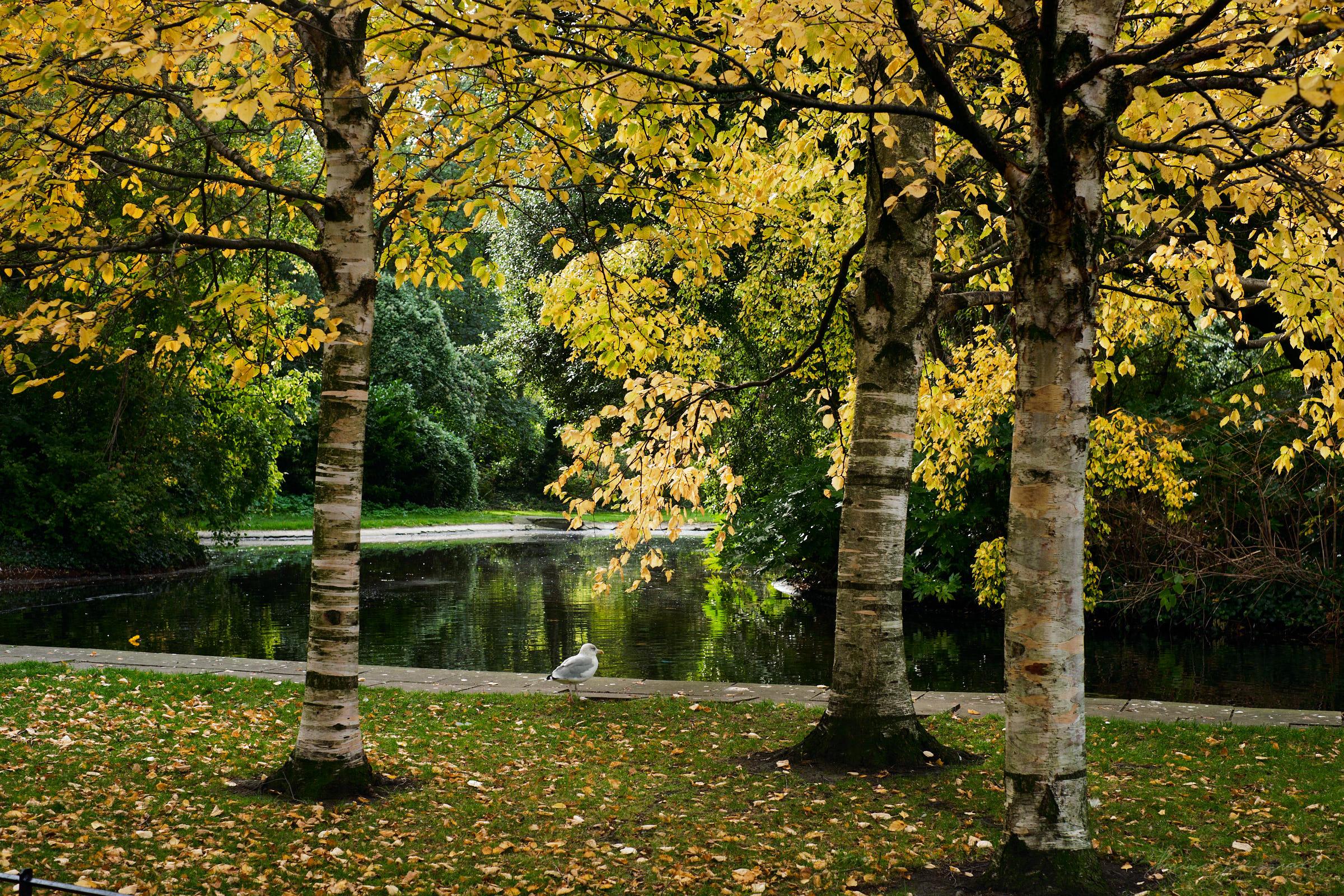 Street-and-park-autumn-387-Jpeg for Web.jpg