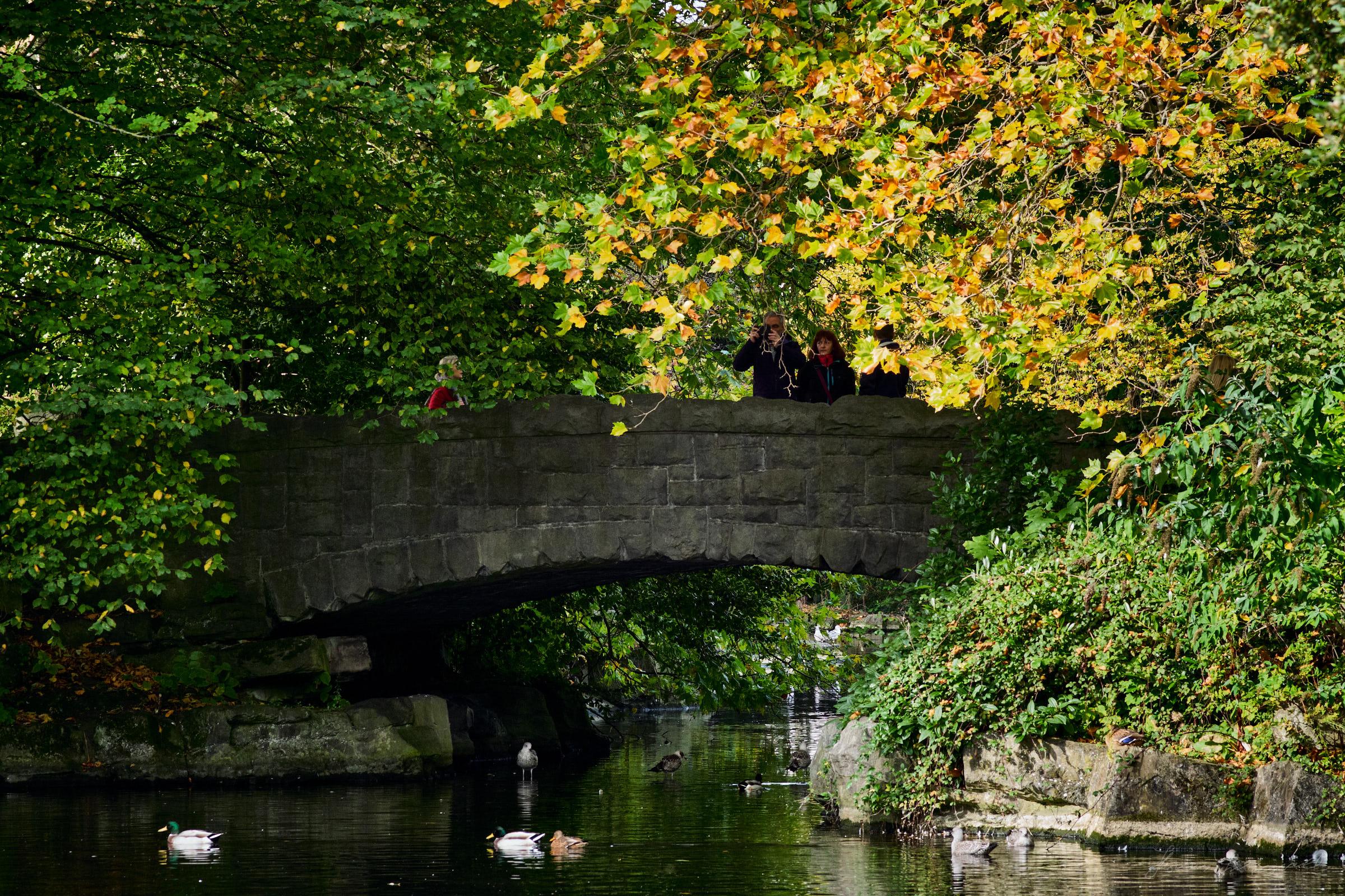 Street-and-park-autumn-407-Jpeg for Web.jpg