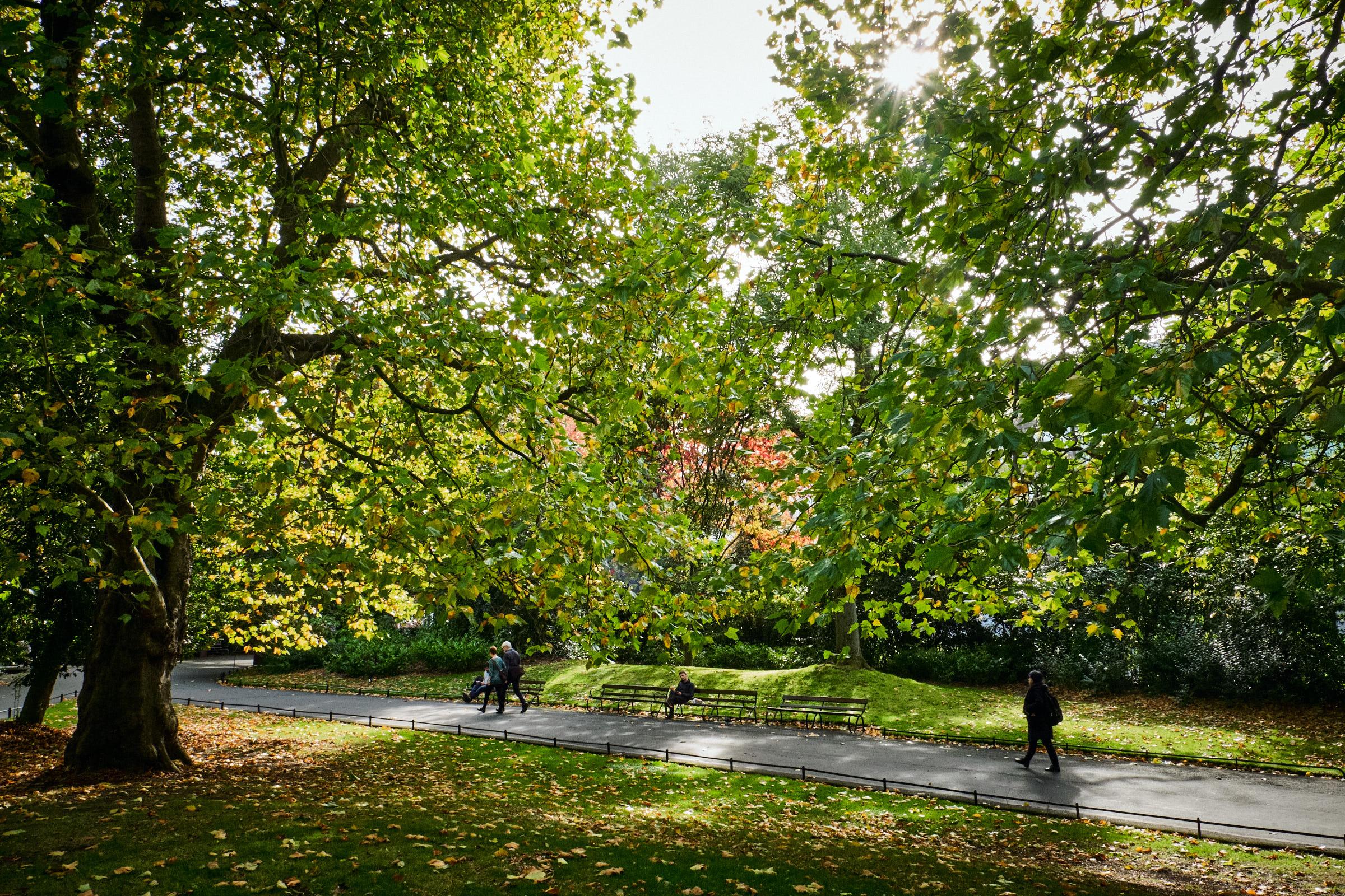 Street-and-park-autumn-464-Jpeg for Web.jpg
