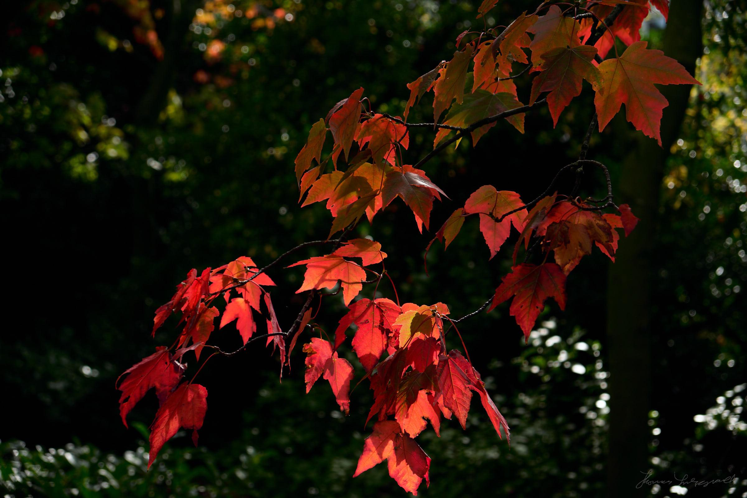 Street-and-park-autumn-468-Jpeg for Web.jpg
