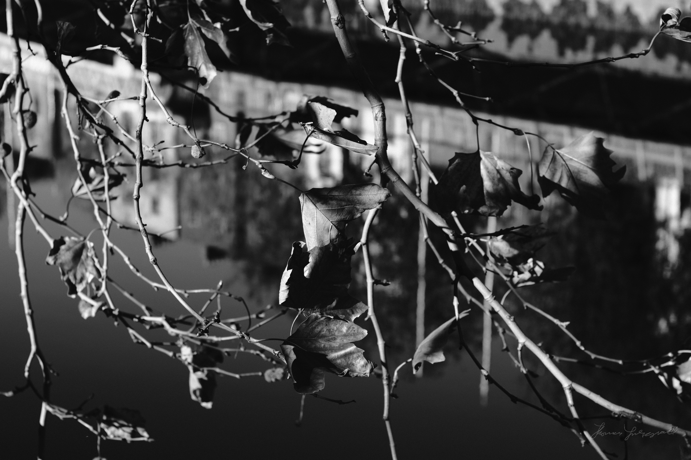 Street-Photography-Dublin-X-Pro2-Acros-018.jpg