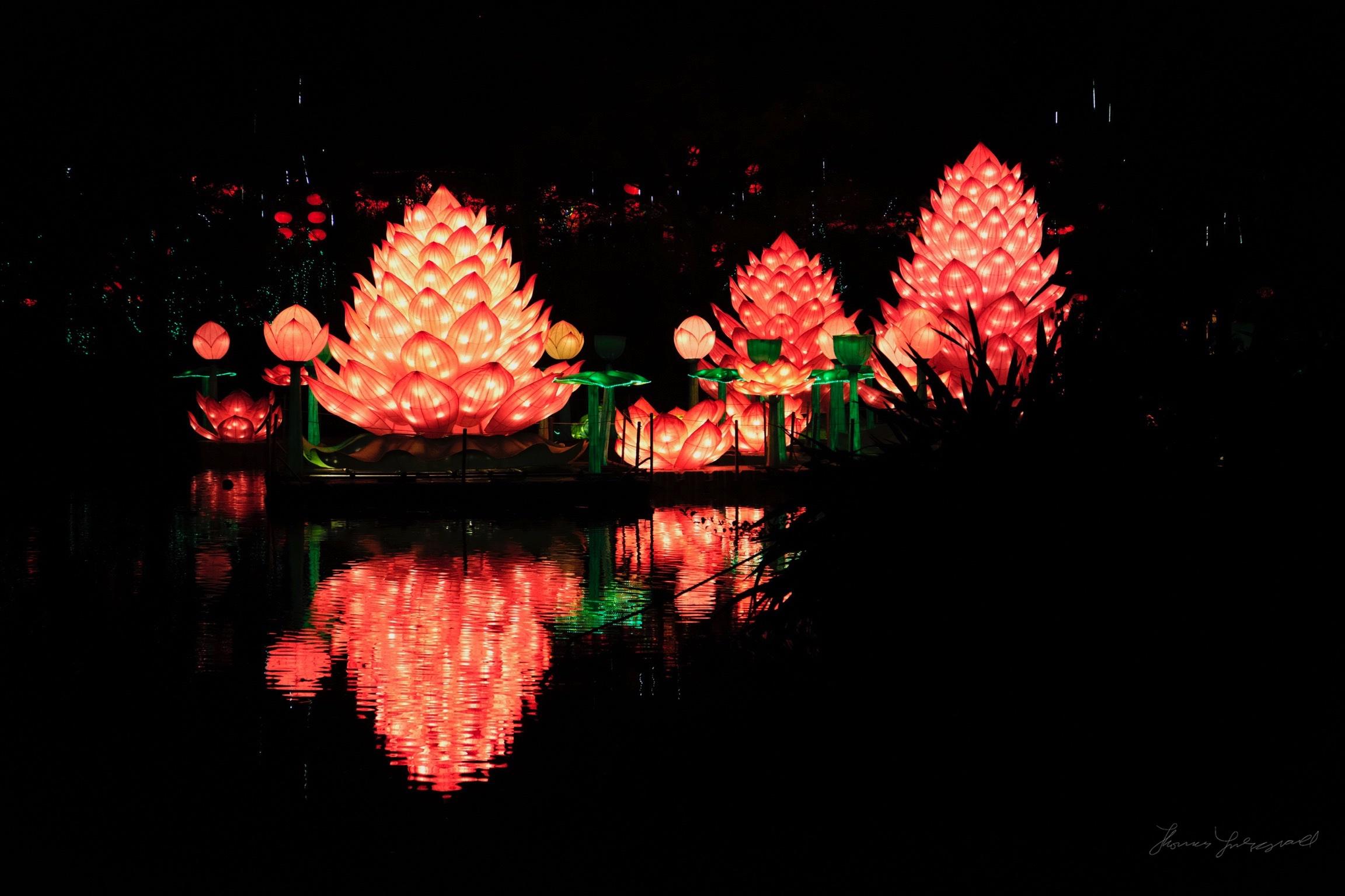 Wild-Lights-Dublin-Zoo-088.jpg