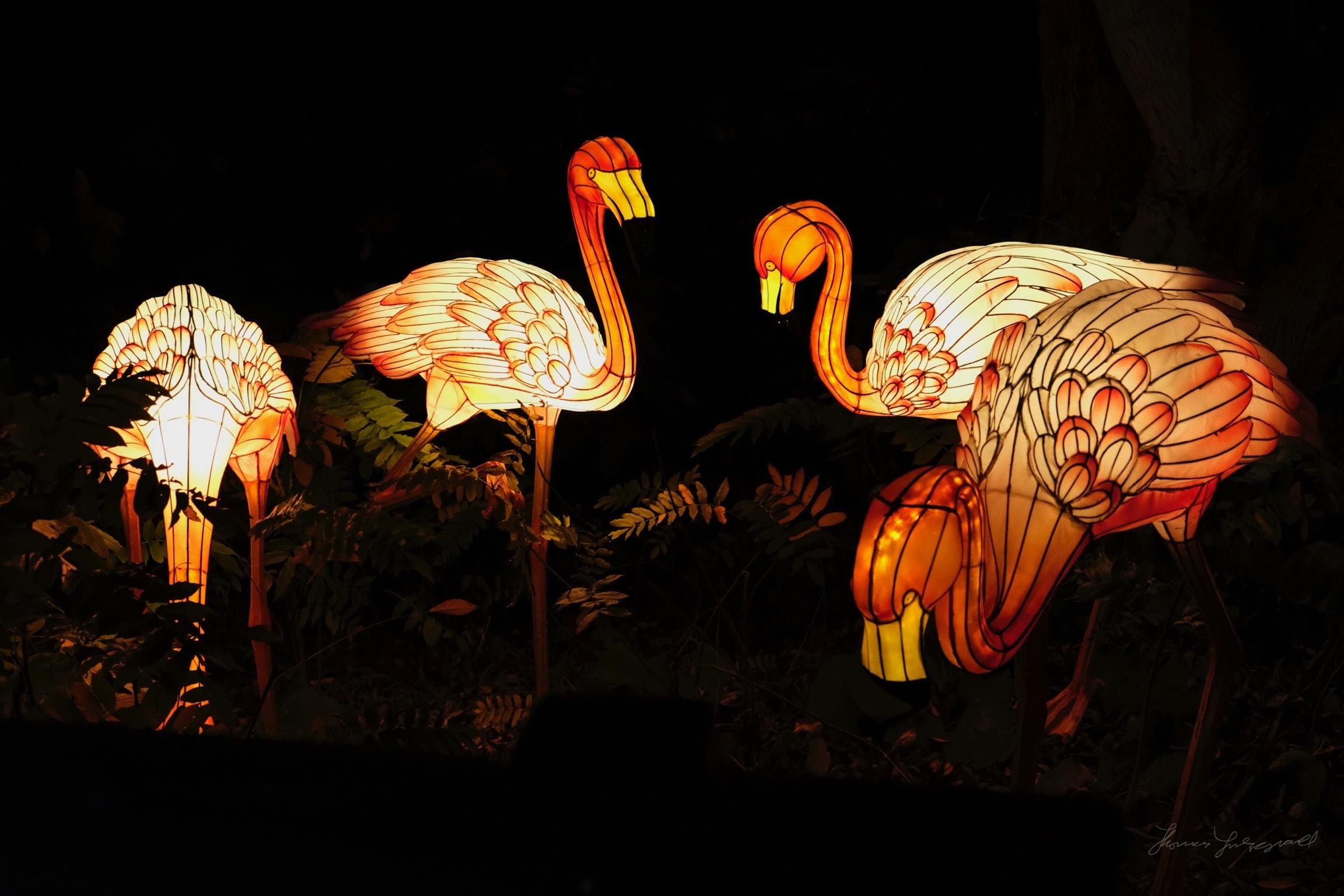 Wild-Lights-Dublin-Zoo-070.jpg
