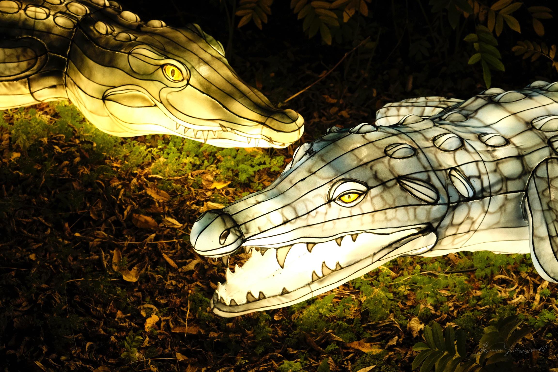 Wild-Lights-Dublin-Zoo-078.jpg