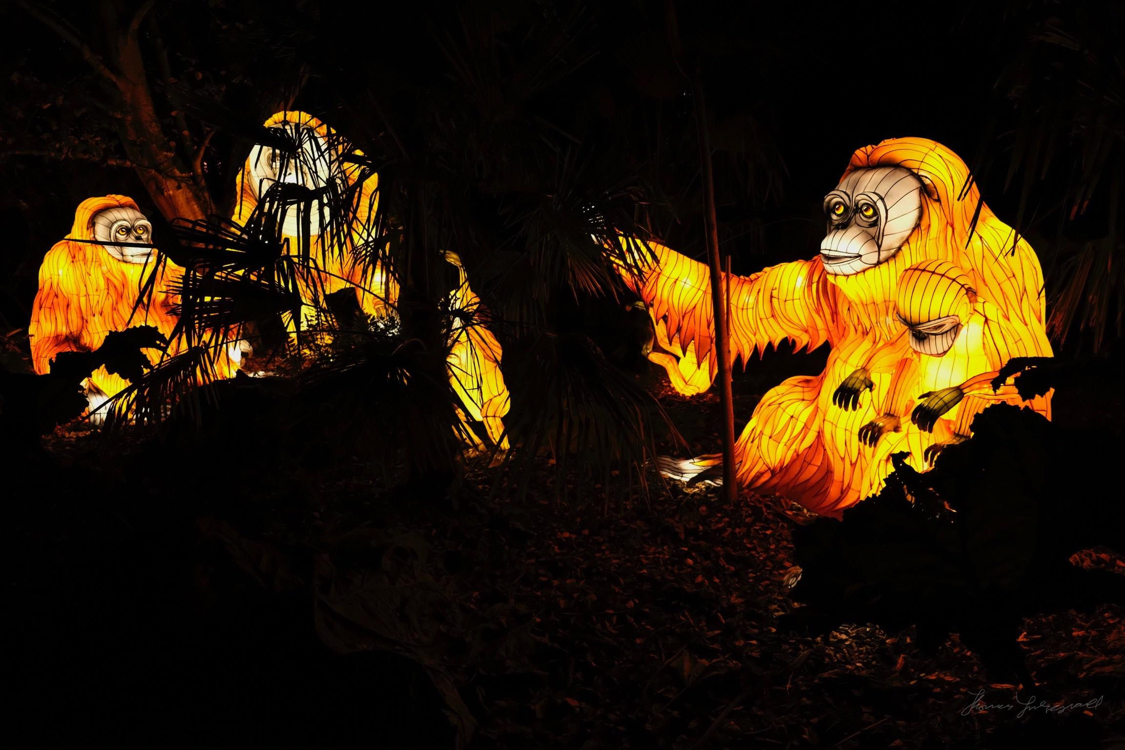 Wild-Lights-Dublin-Zoo-087.jpg