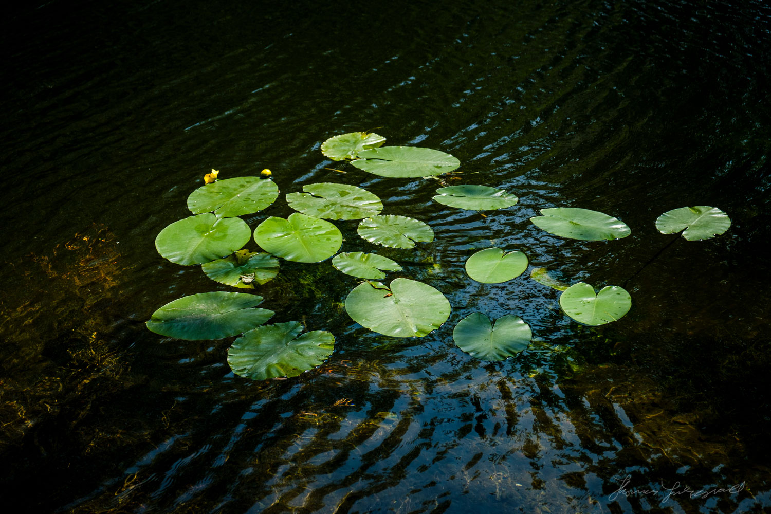 Lilly Pads in the Grand CanalTwo years with Fuji X-Pro2 - Landsc